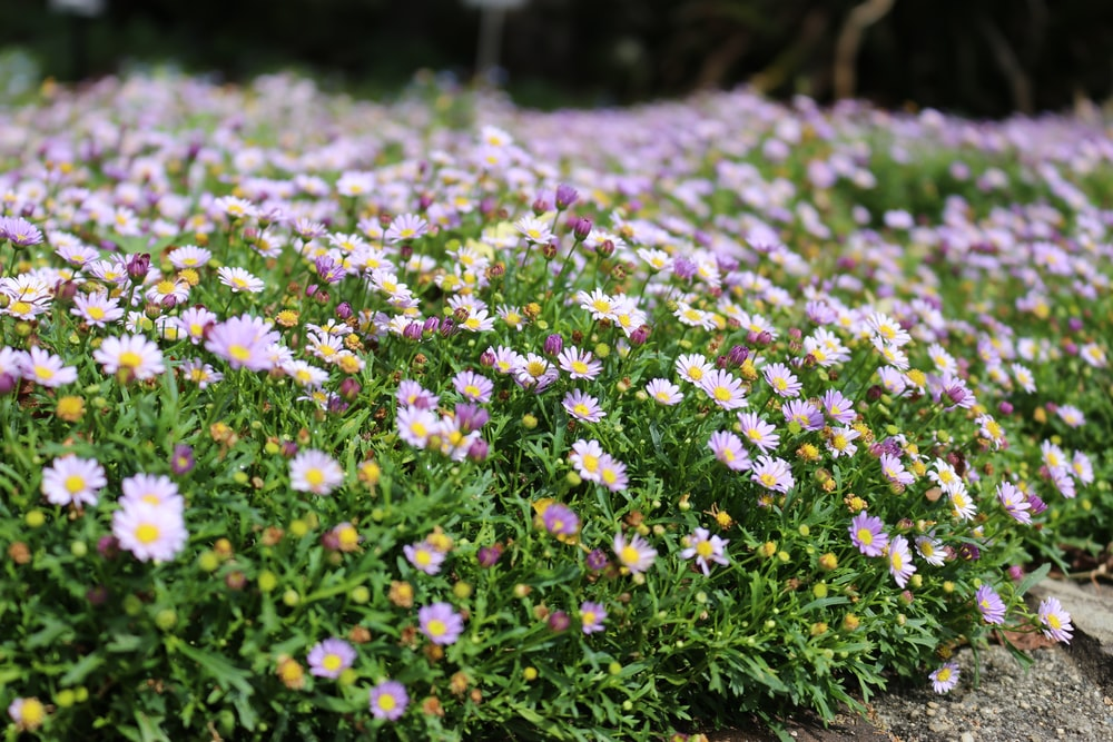 purple and white flowering plants