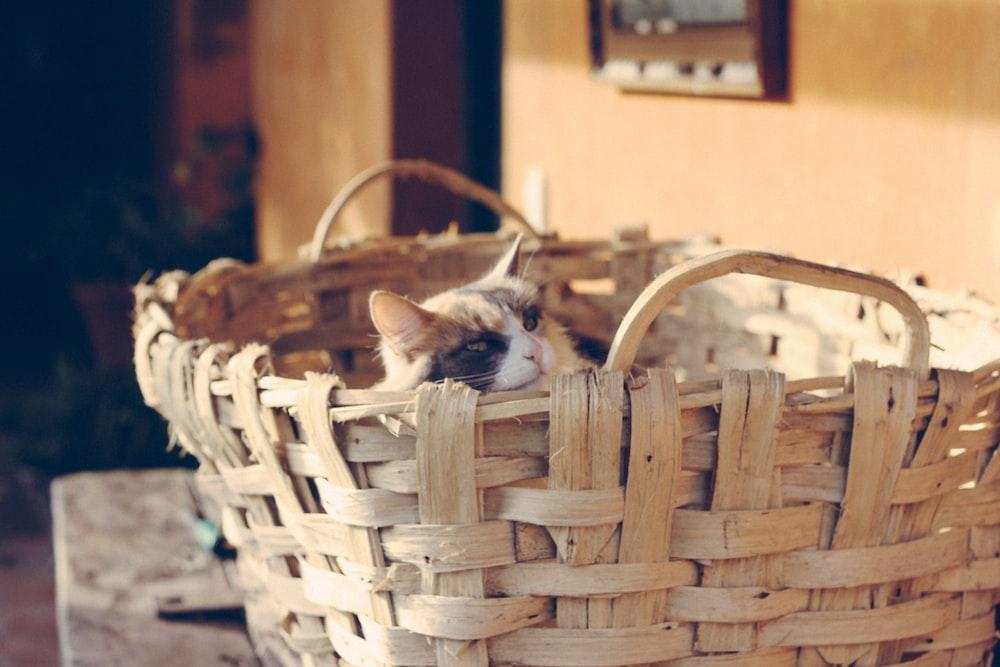 kitten in work wicker basket