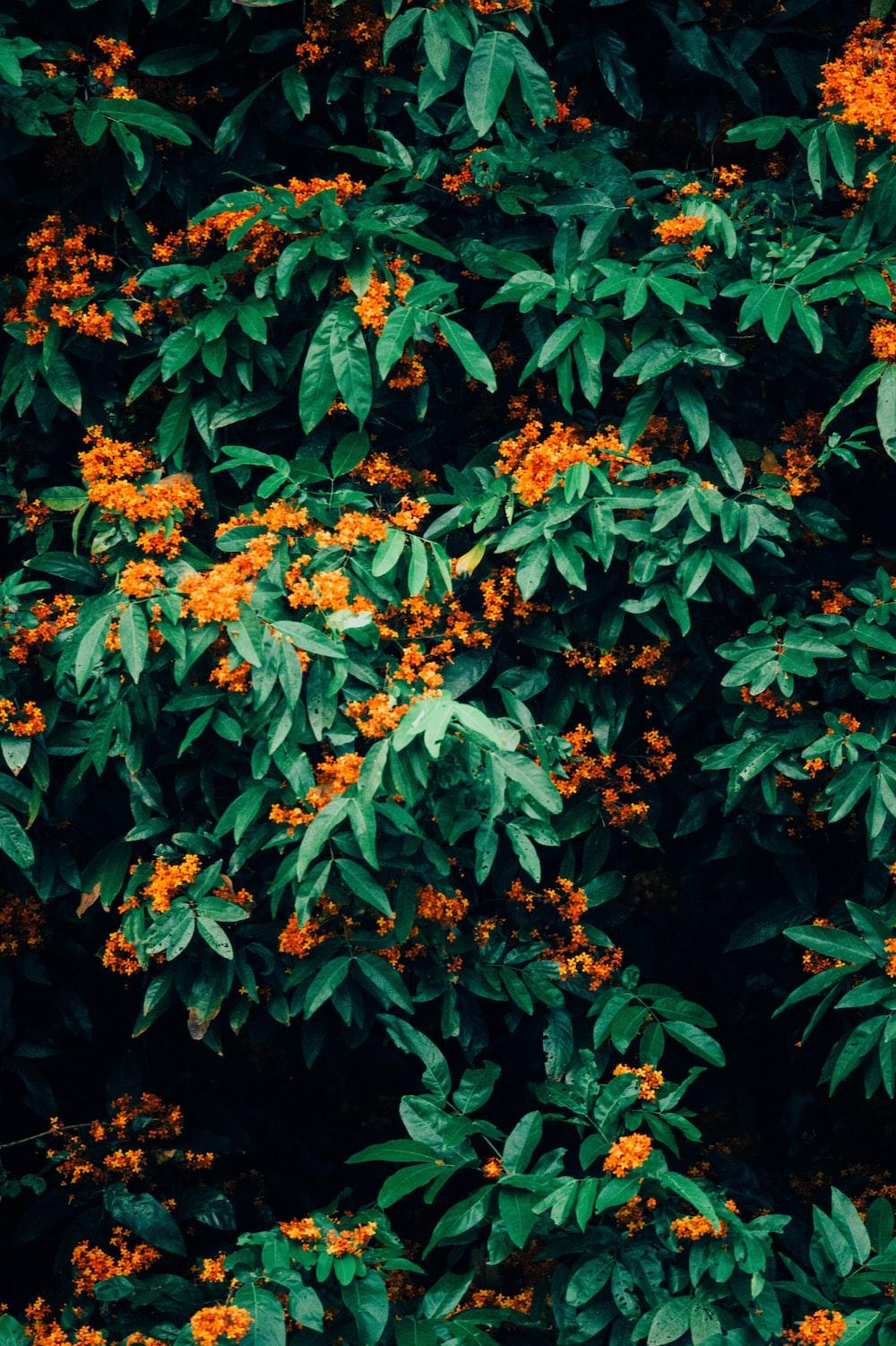orange petaled flower