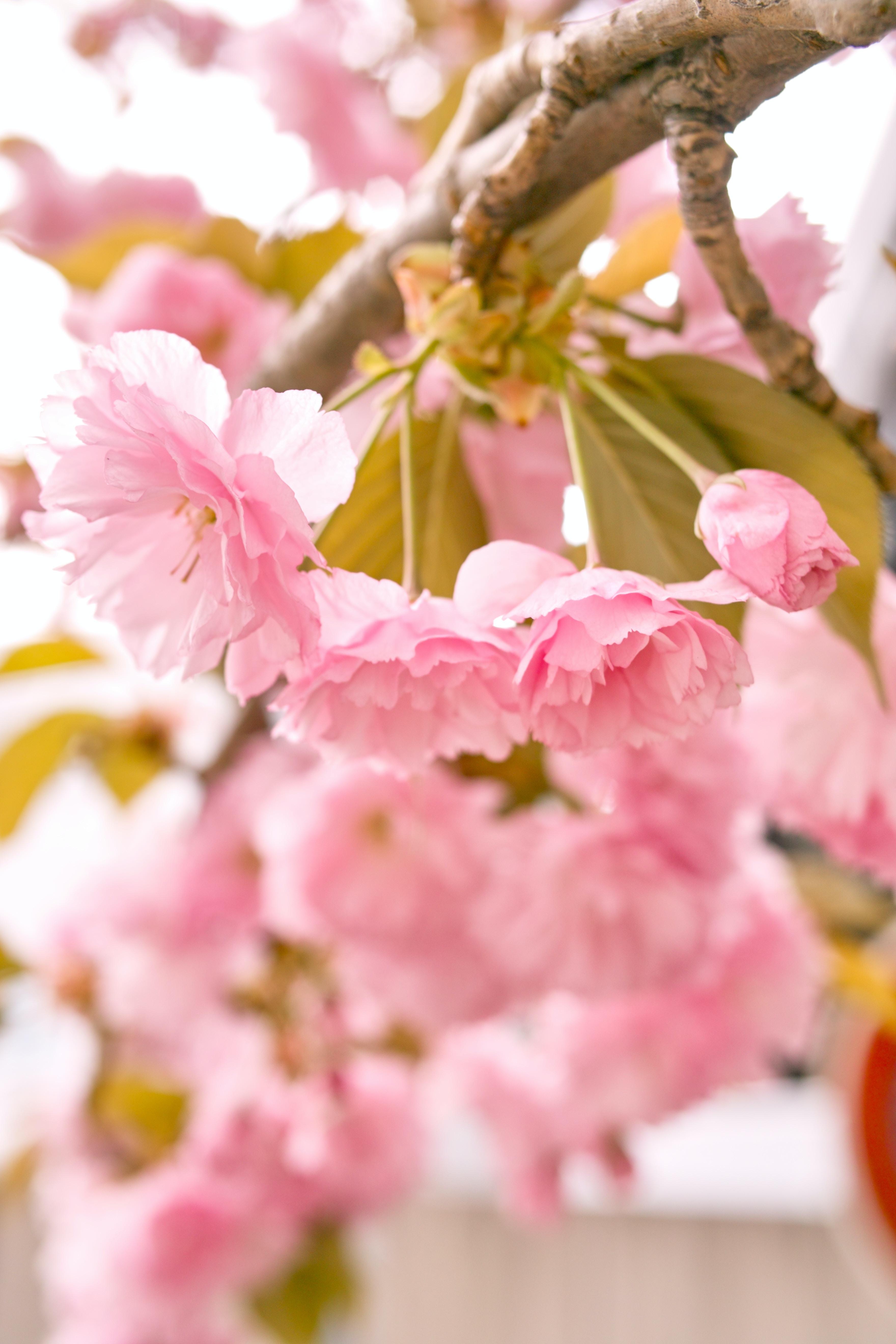 pink petaled flower closeup photography