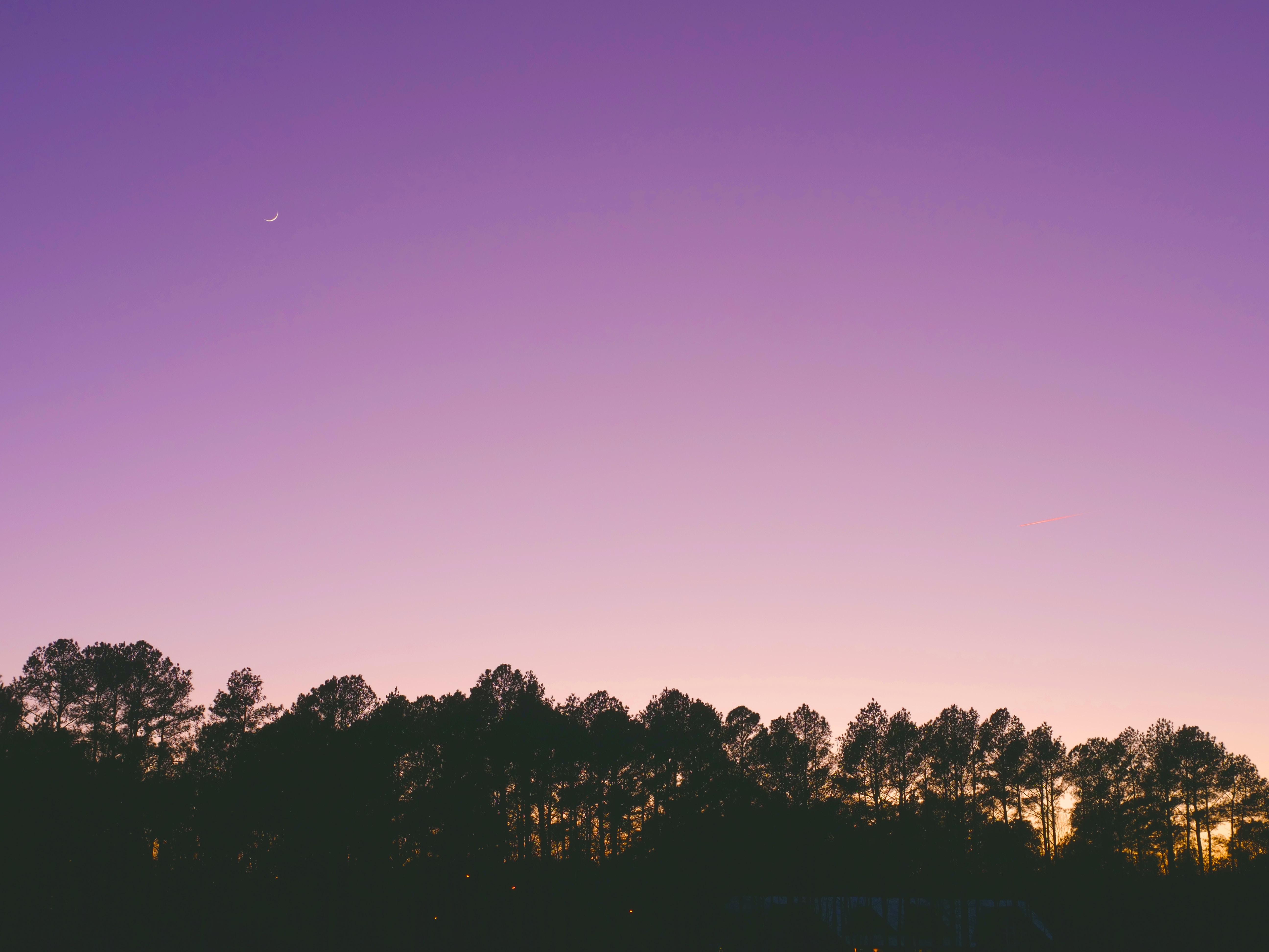trees under purple sky