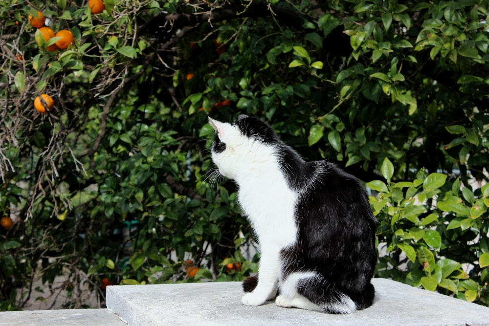 white and black cat near orange tree