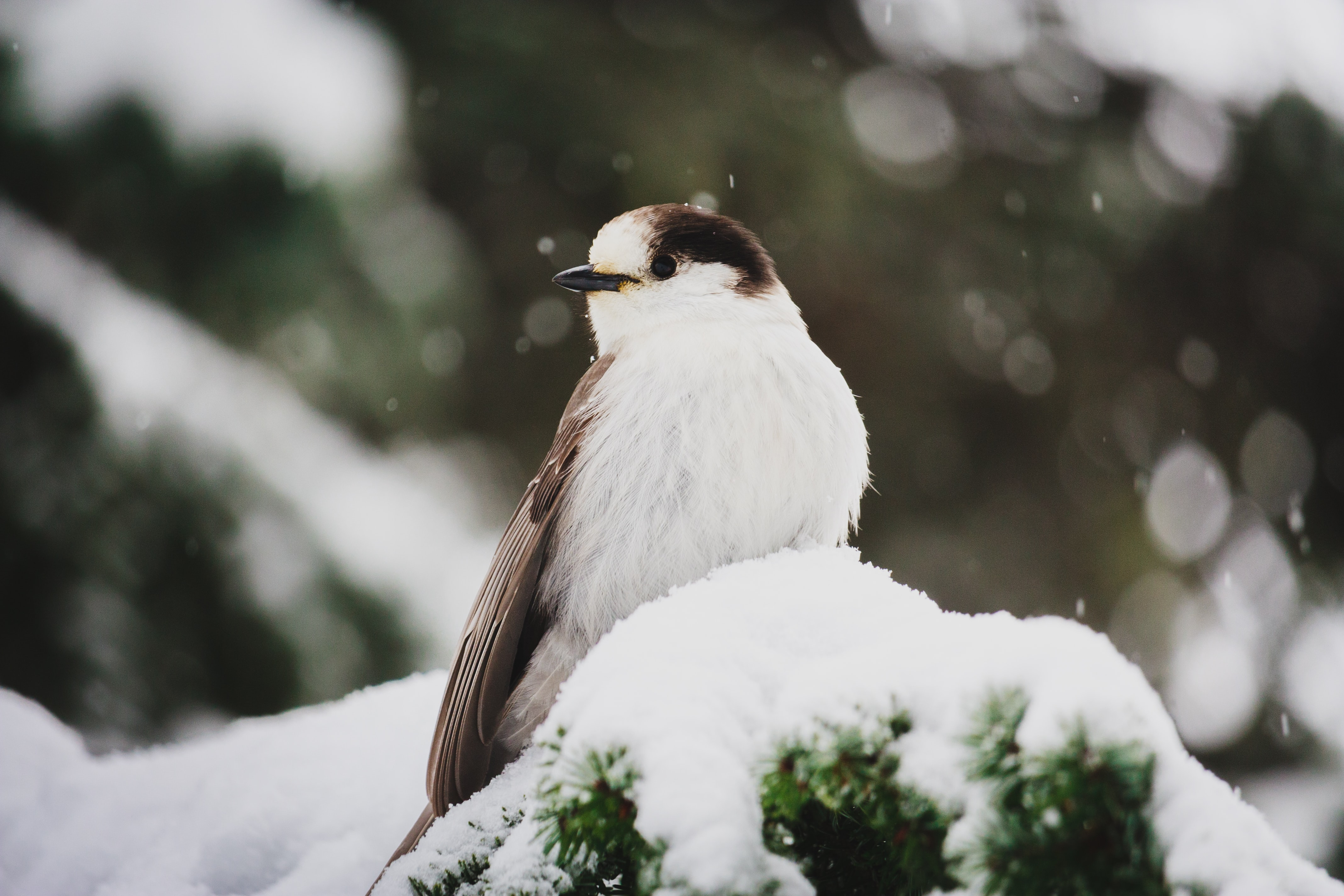 white and black bird on green plants with snow