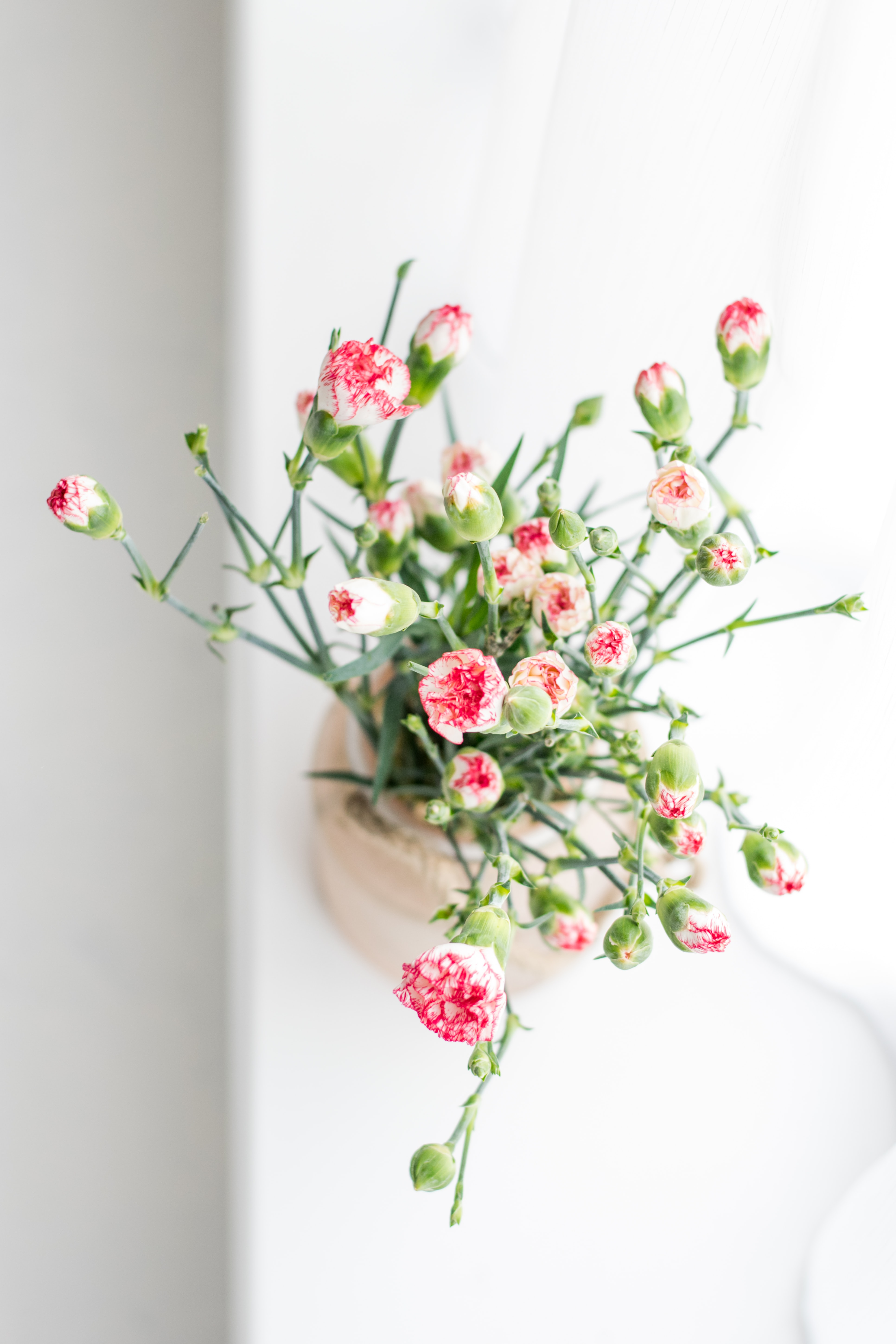potted pink-and-white petaled flowers