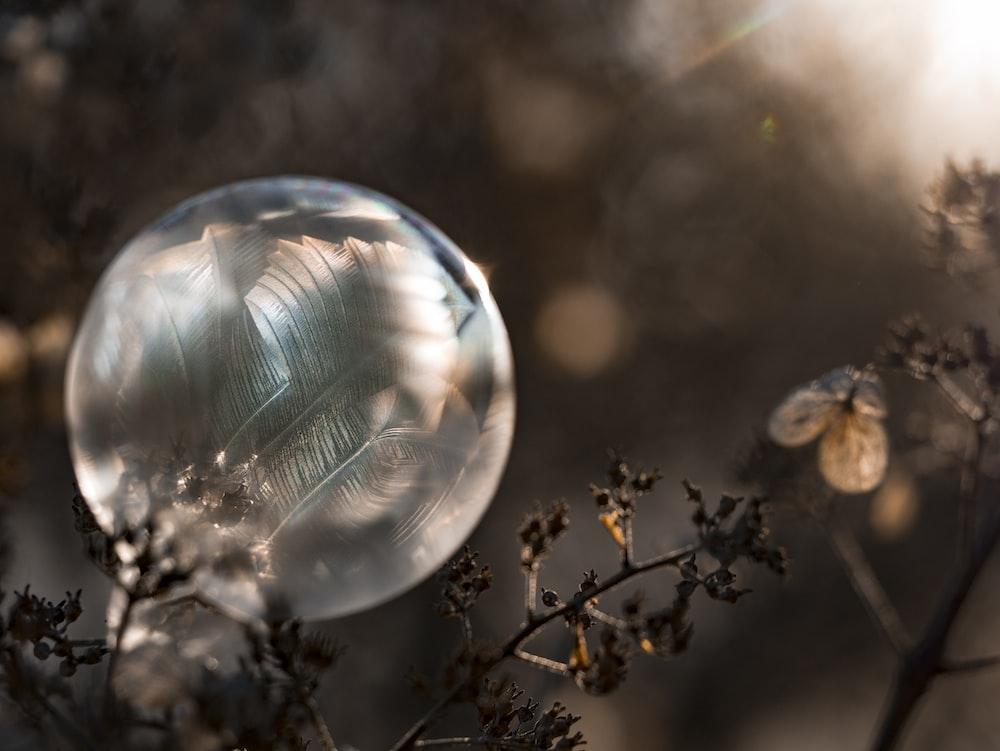 shallow focus photo of bubbles
