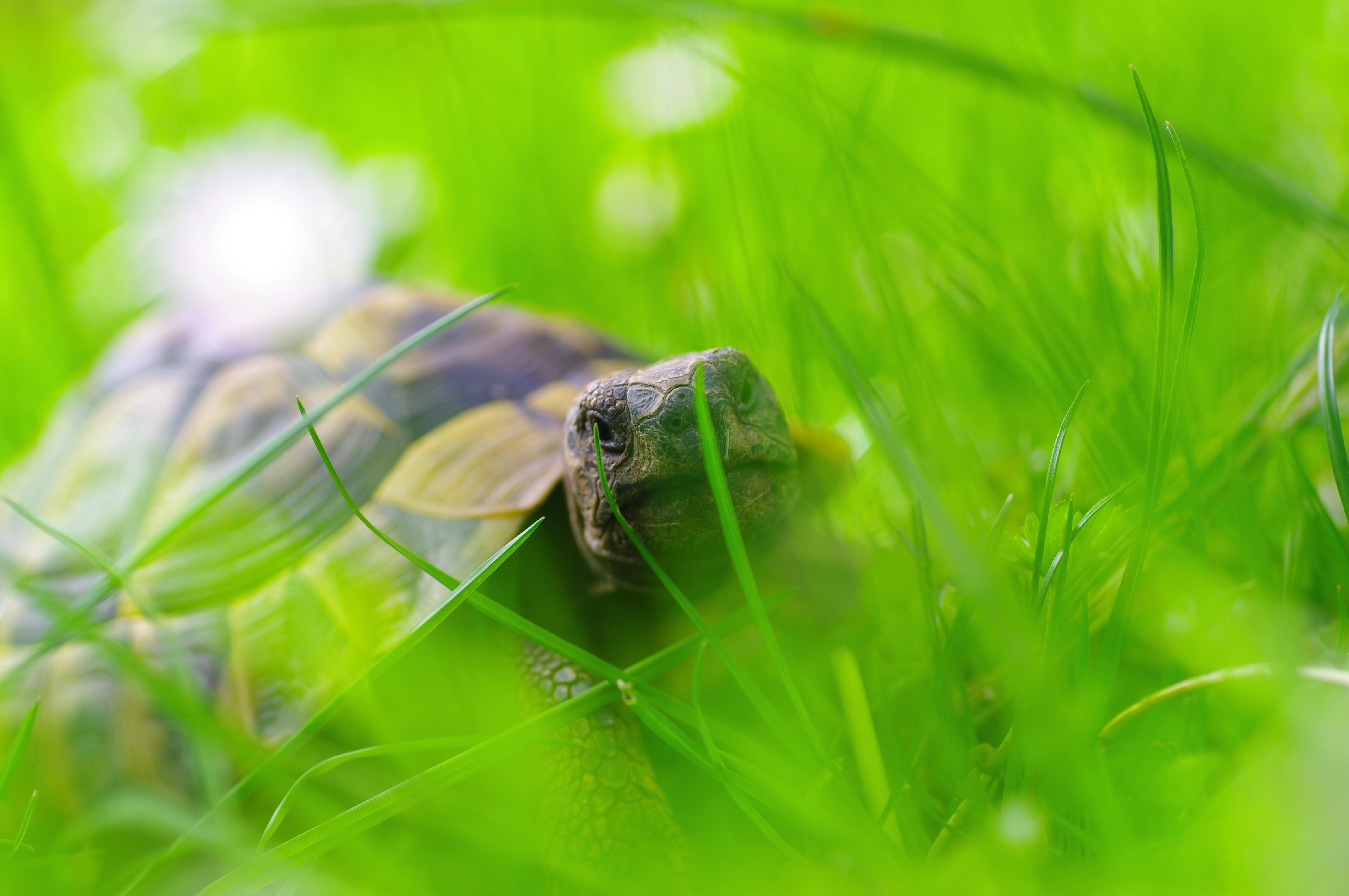 brown turtle on grass