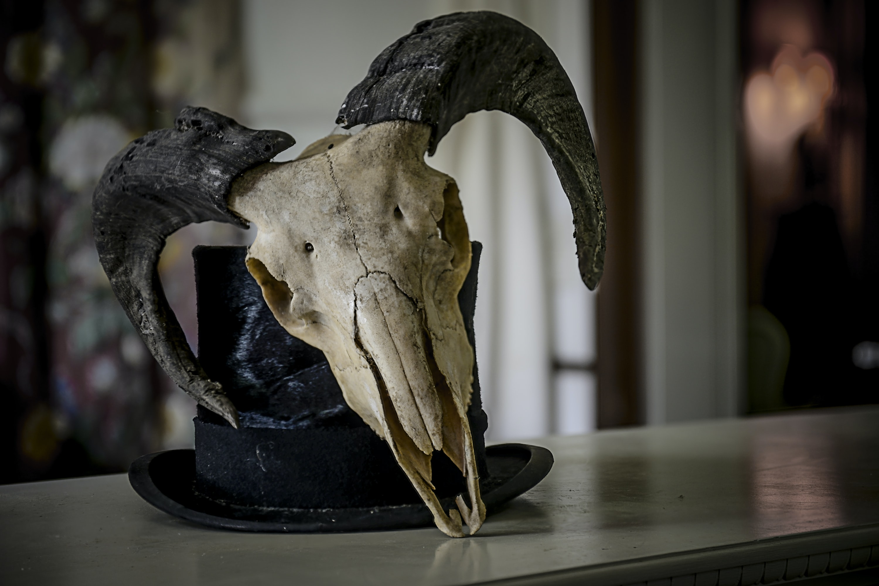 selective focus photography of bull skull