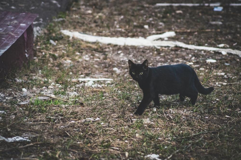 black cat walking on grass near wooden board