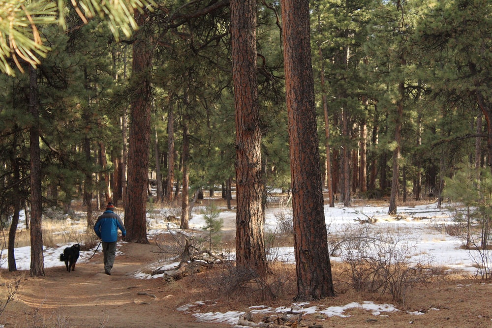 man walking beside dog on pathway surrounded with trees