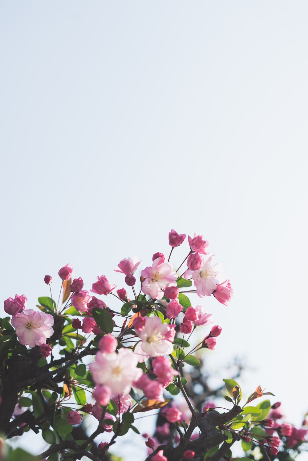 white-and-pink flowers