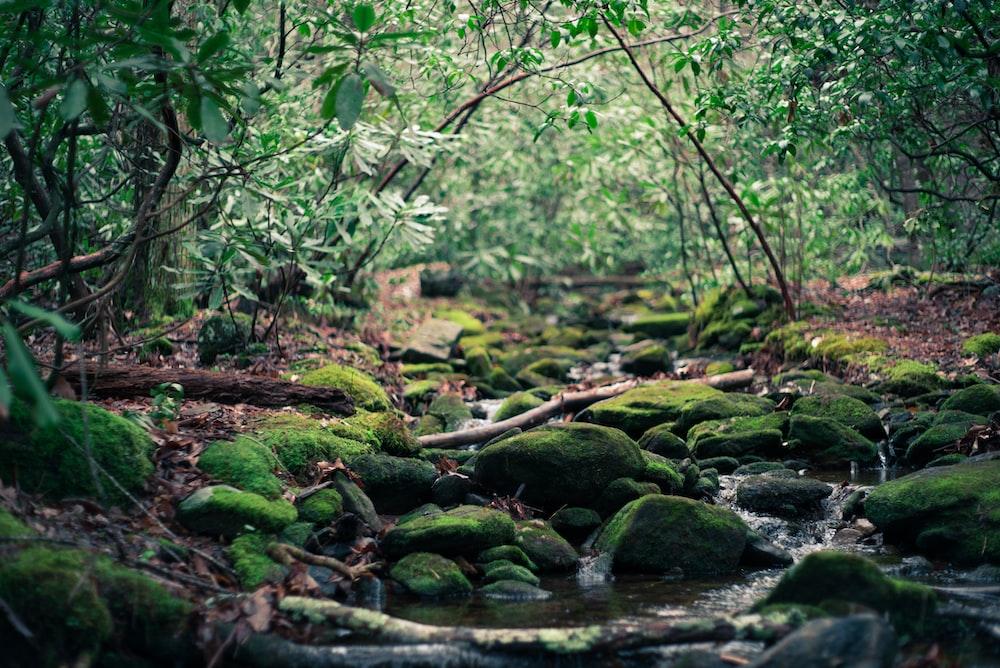 spring water between green trees