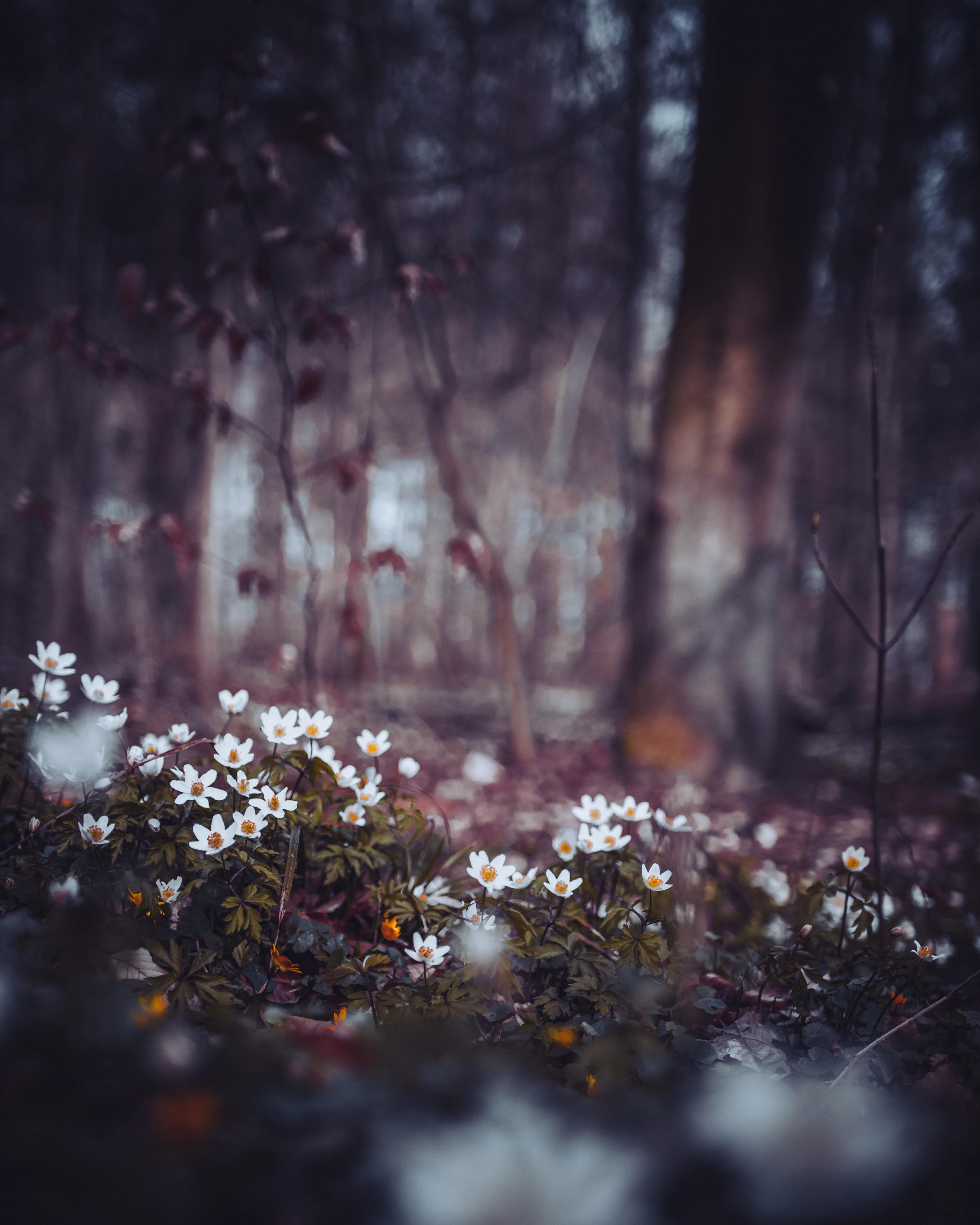 white flower field on macro shot