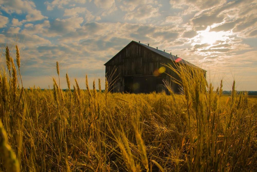 barn near grass in open field