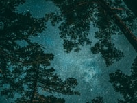 green leafed trees during nighttime