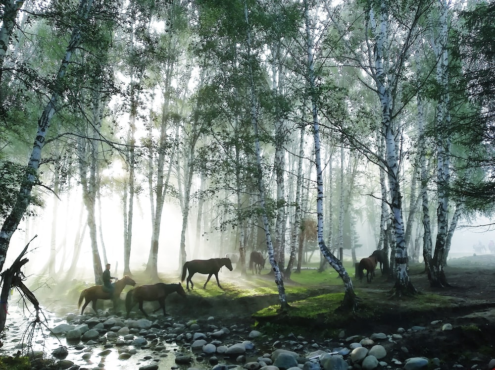 horses under green trees at daytime