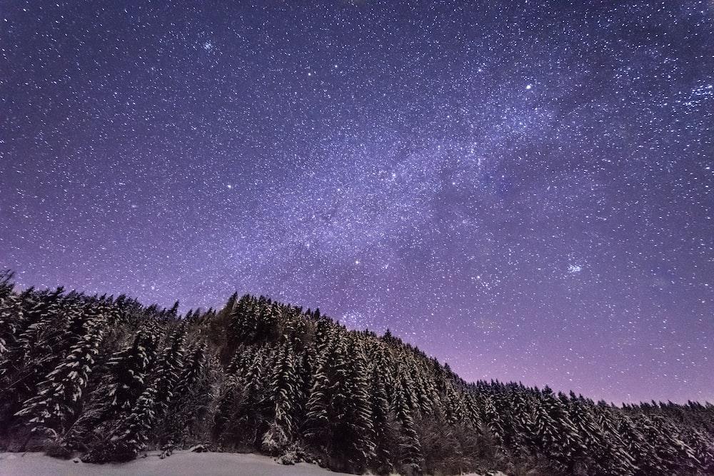 snow filled tall trees under purple sky full of stars