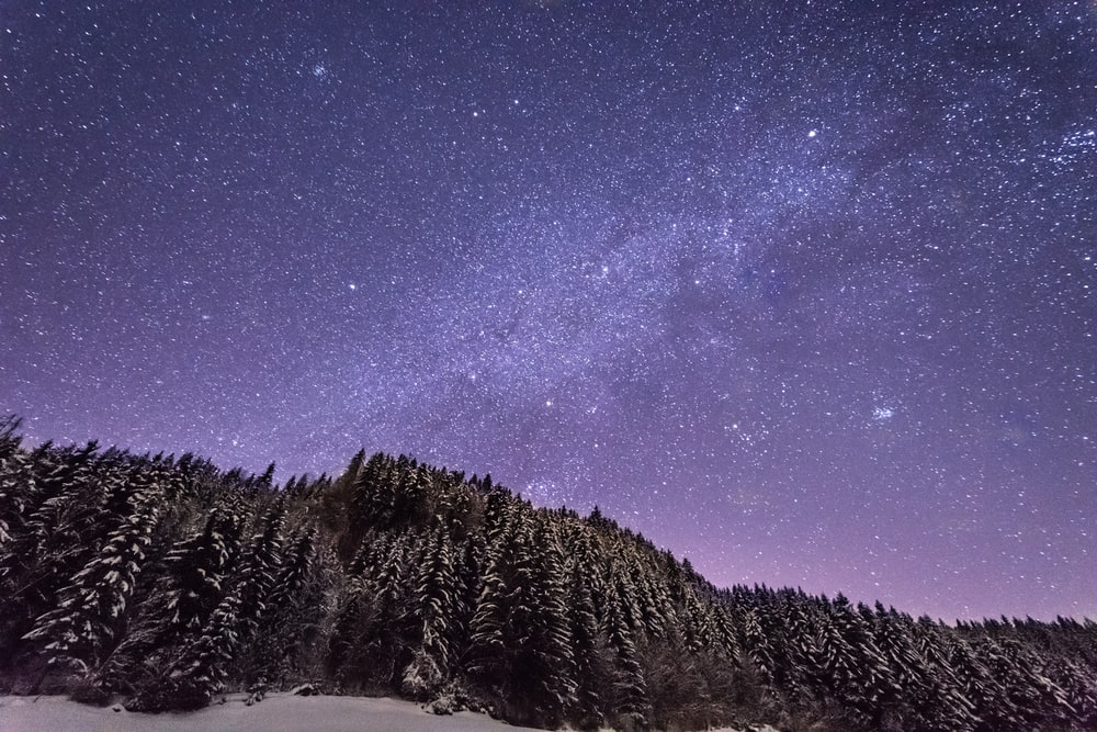 snow filled tall trees under purple sky full of stars