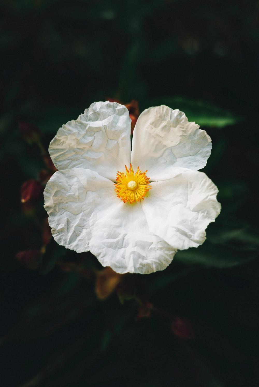 shallow focus photo of white petaled flower