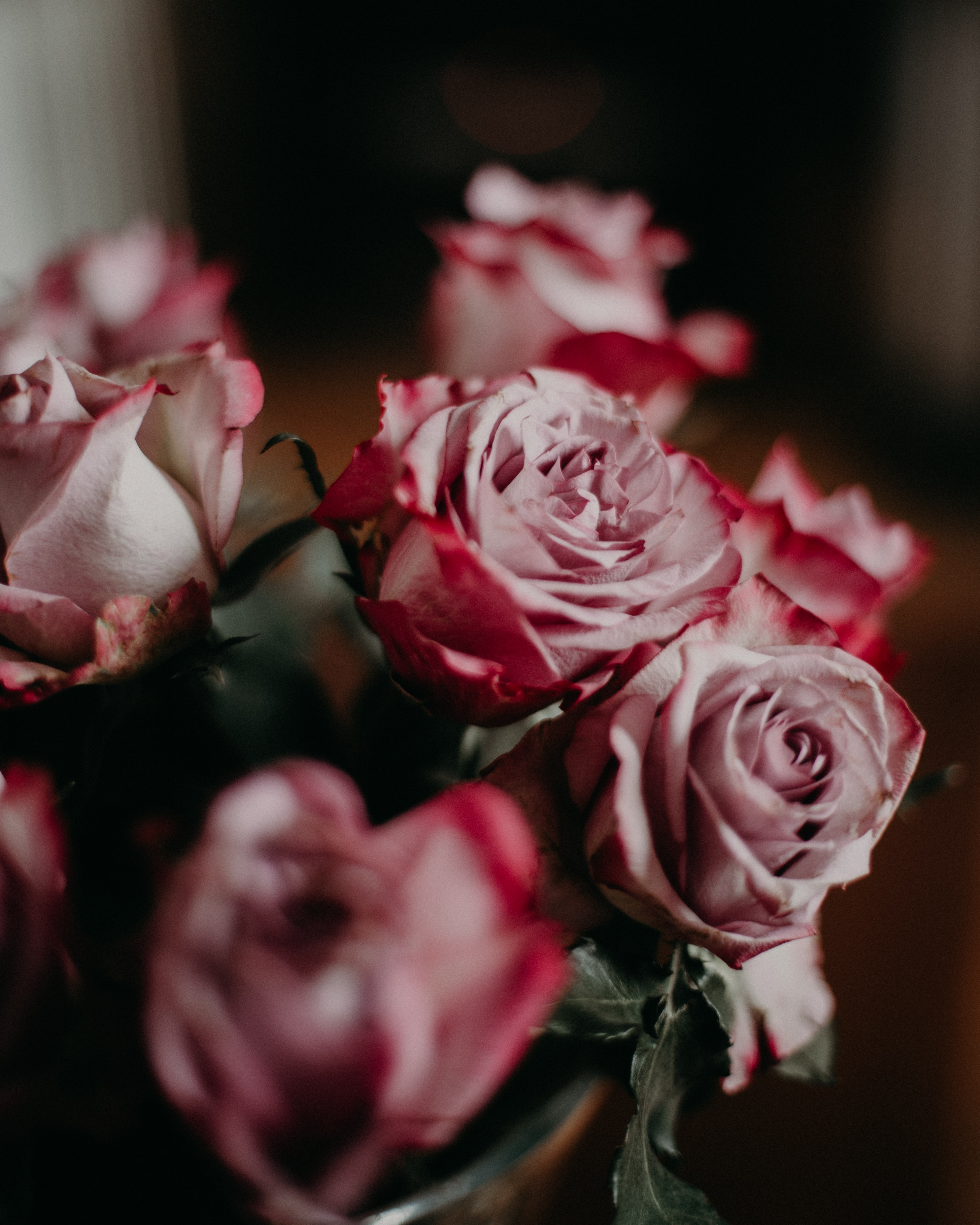 selective focus photography of pink rose flower arrangement