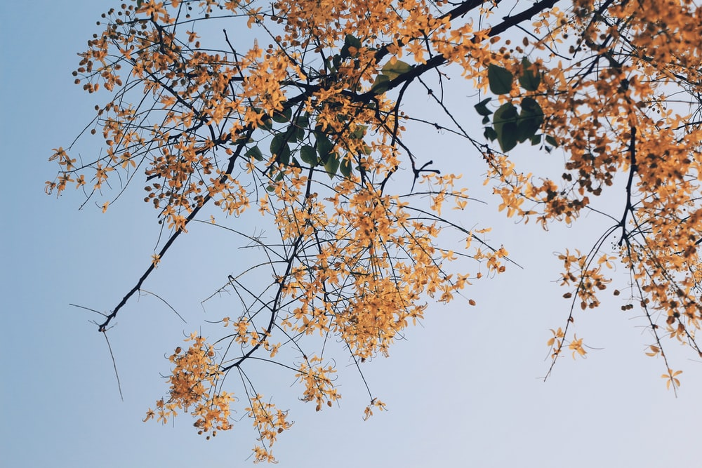 low angle photography of yellow flower tree