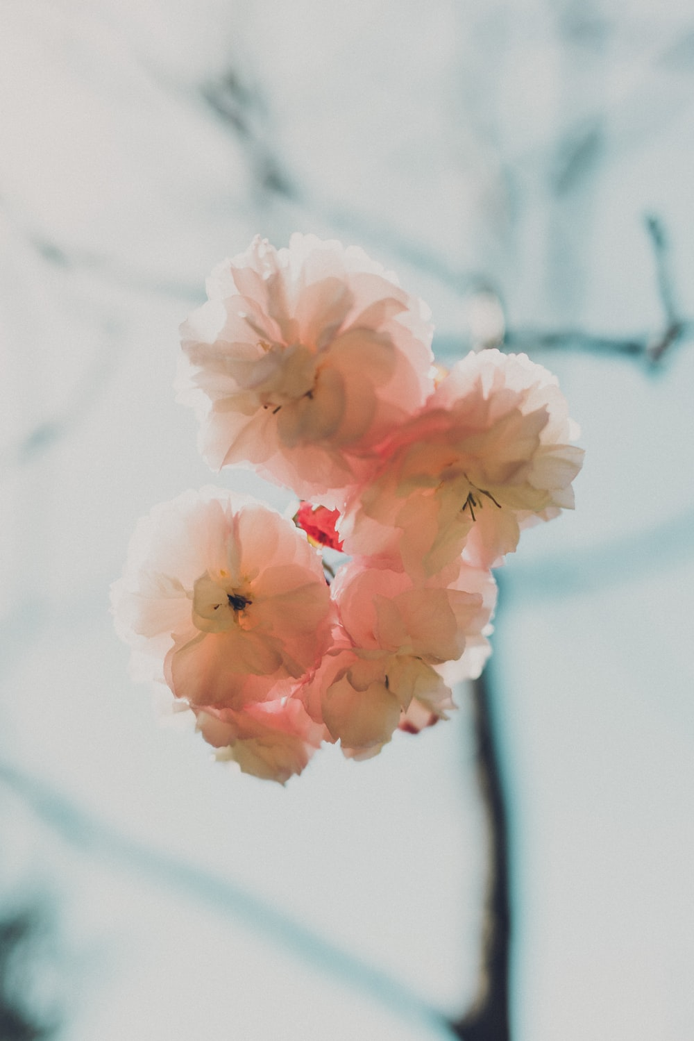 white multi-petaled flowers on macro shot