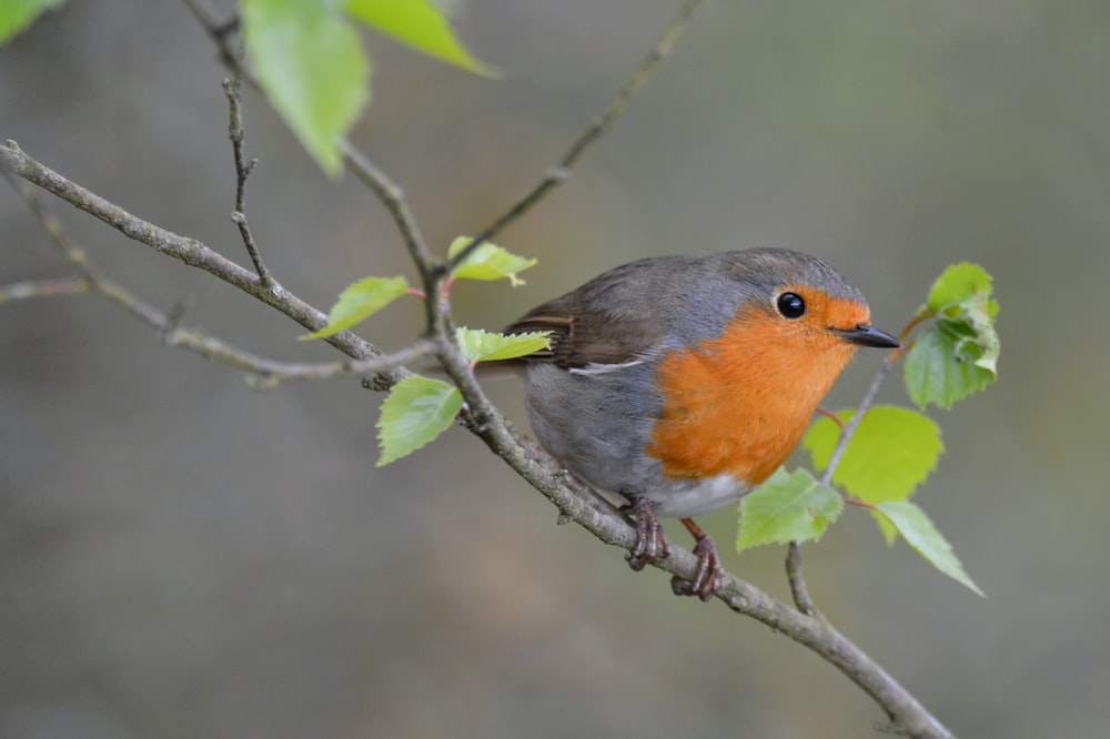 green and orange bird perch on tree branch