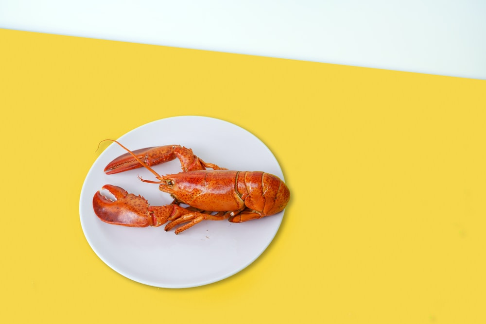 cooked lobster on ceramic plate