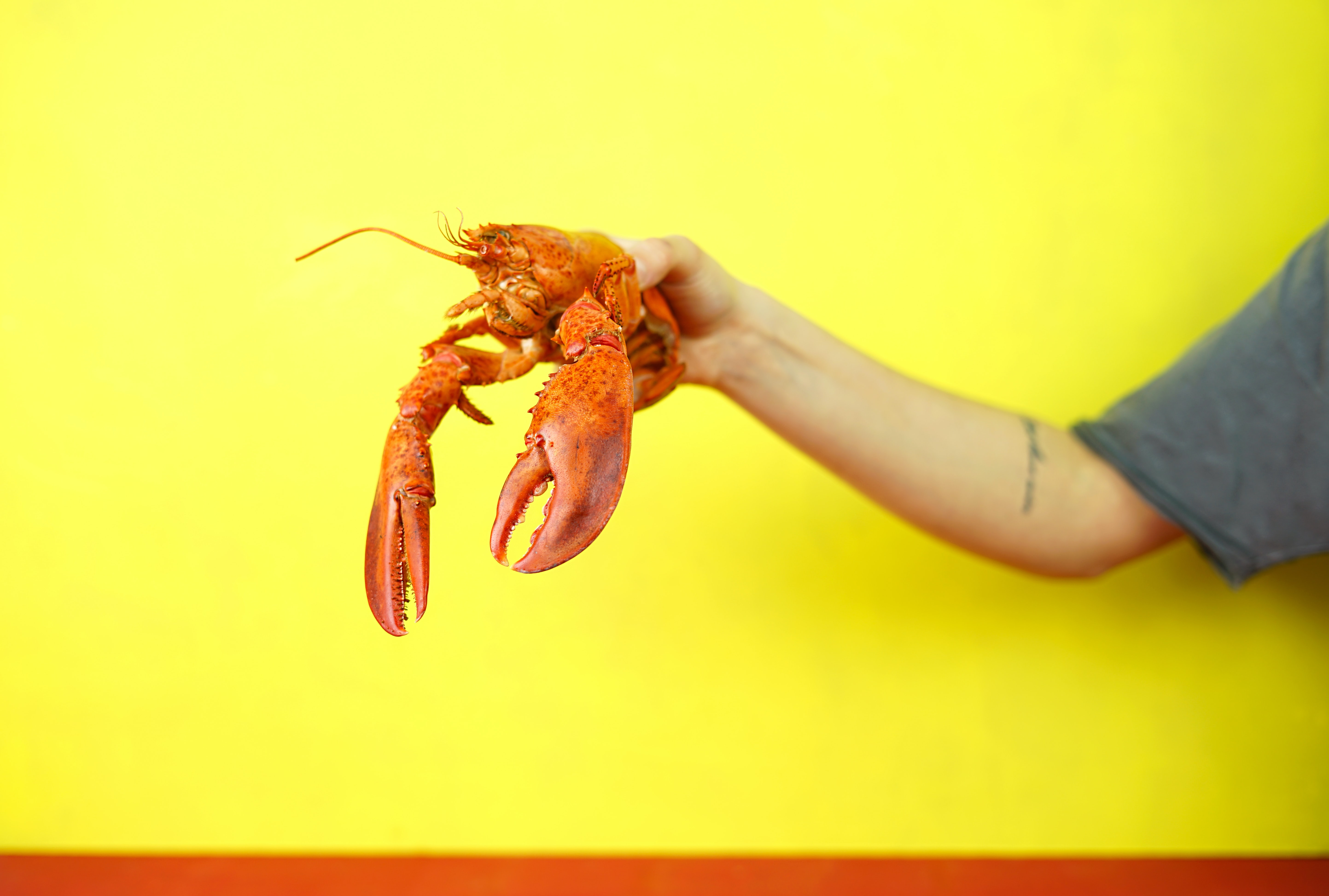 person holding lobster