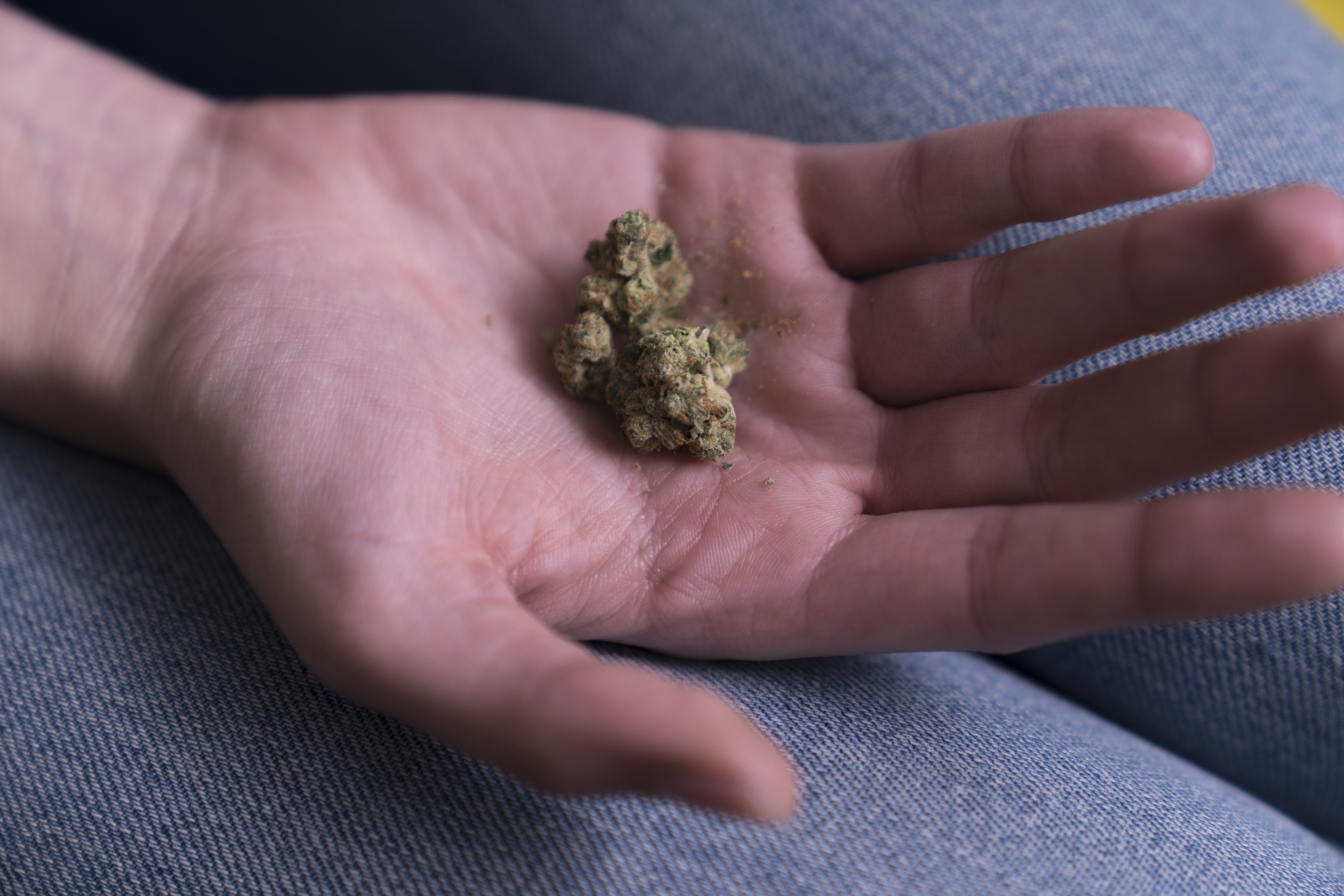 person holding cannabis buds