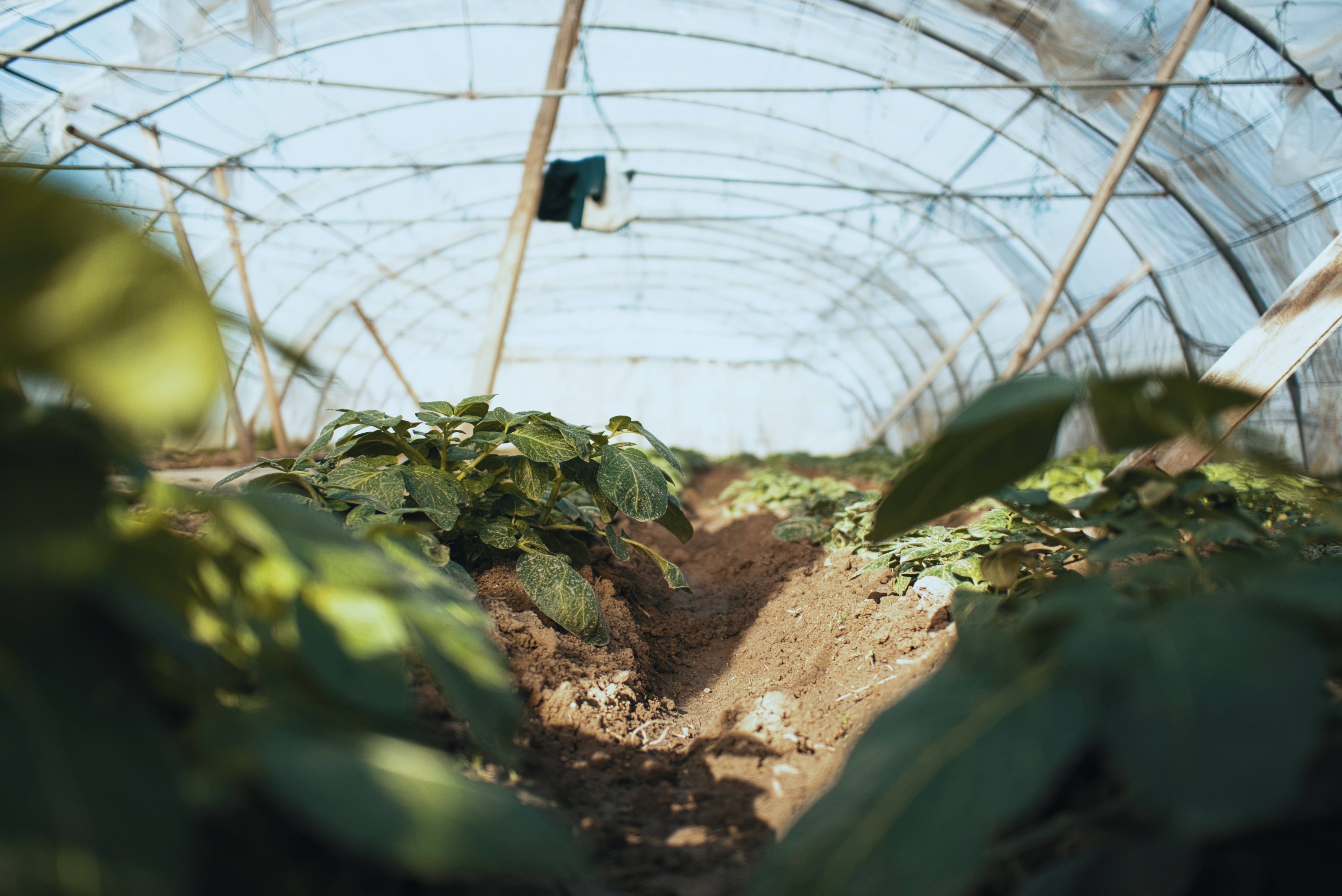 worm's-eye view photography of plant nursery