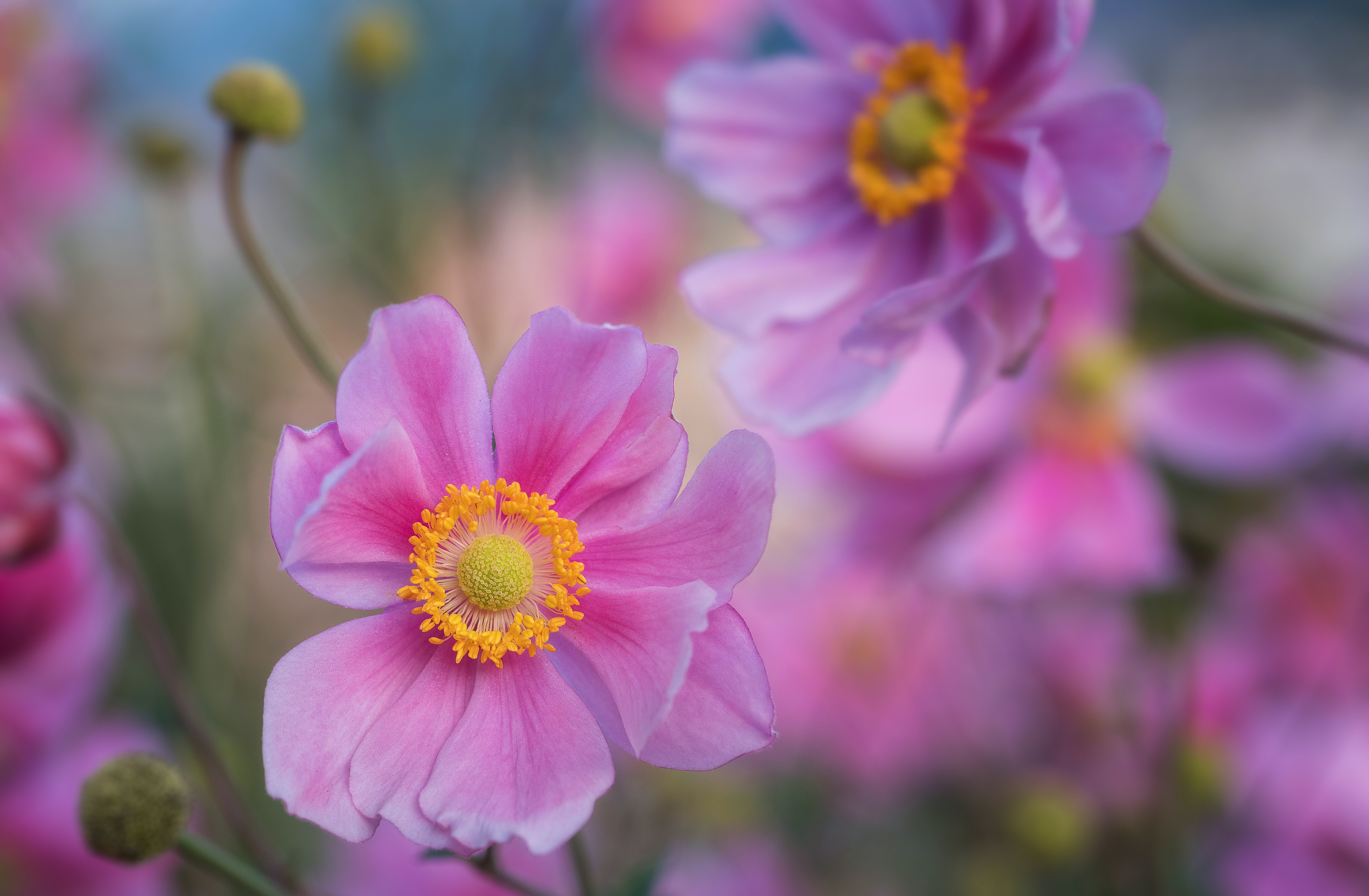 selective photo of pink flowers
