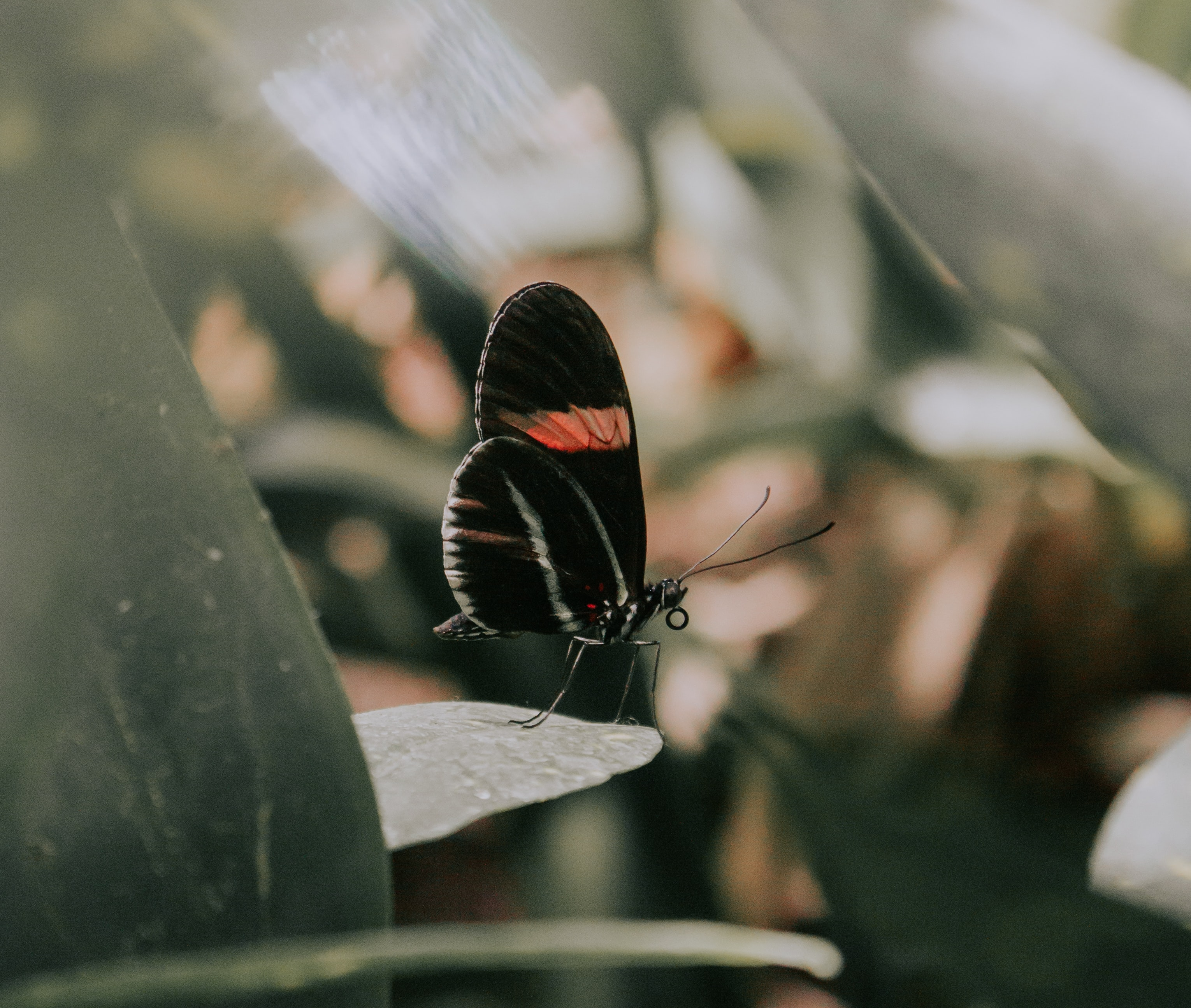 The Black Butterfly suffering stories