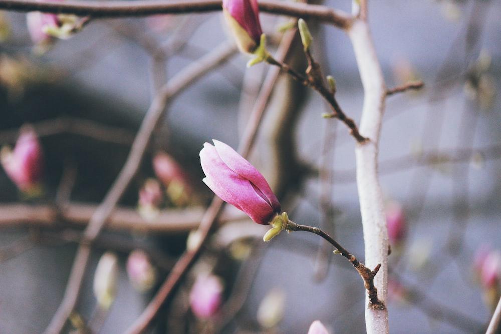 tilt shift photography of a pink flower bud