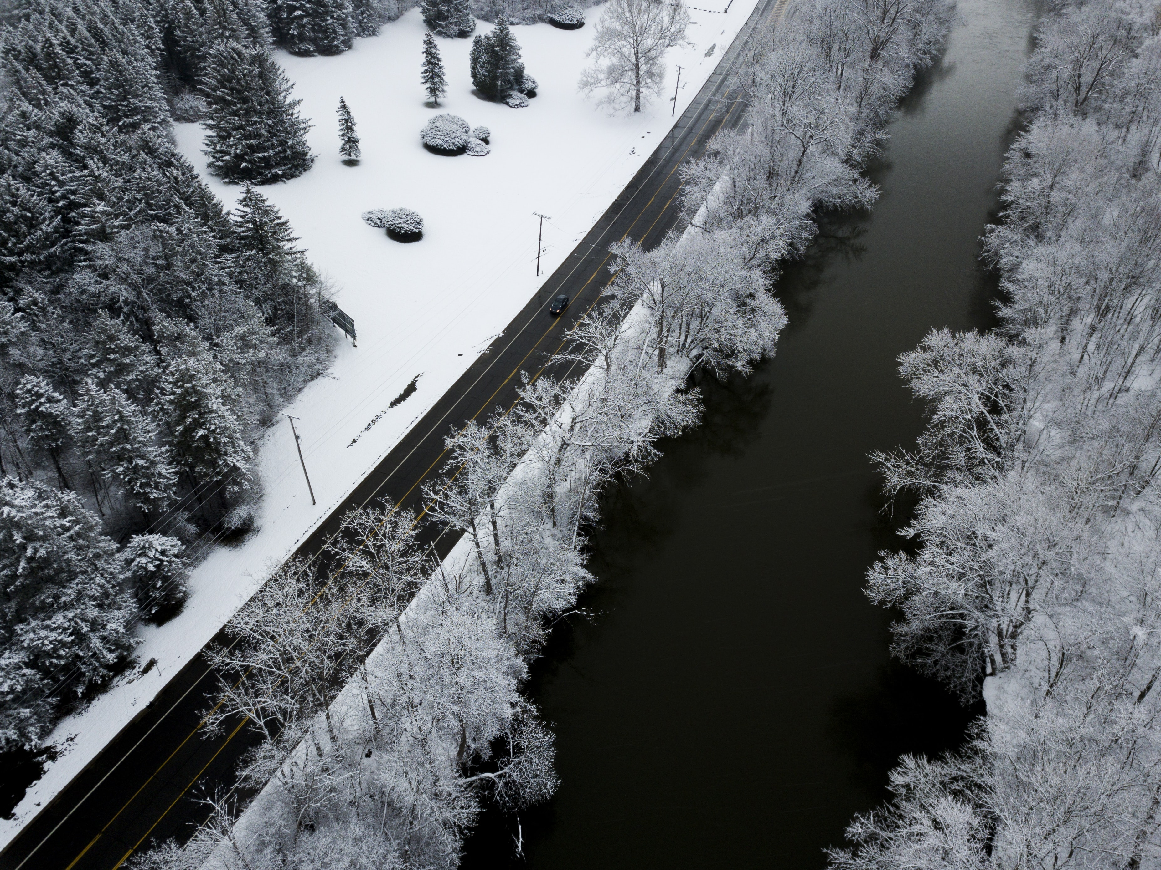 grayscale aerial view of trees and body of water