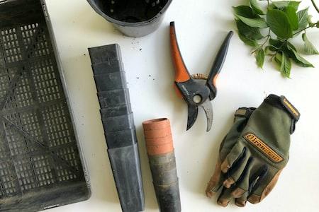 Garden Basics for Beginners