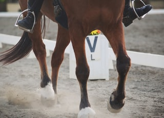 photograph of running horse