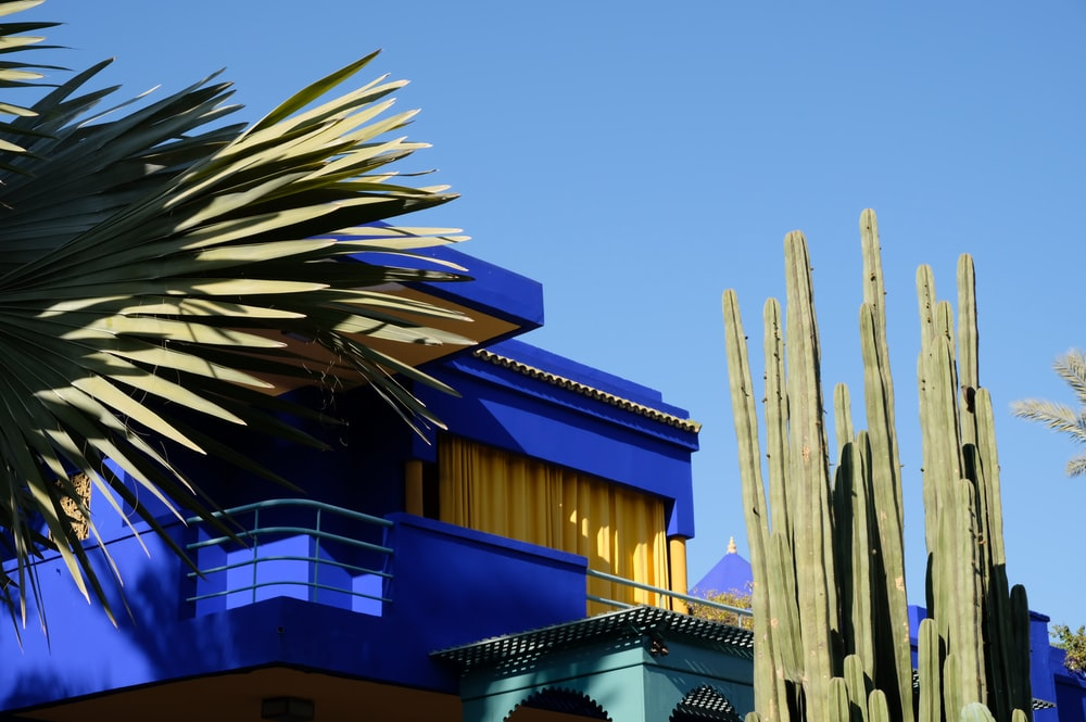 blue painted house beside cactus