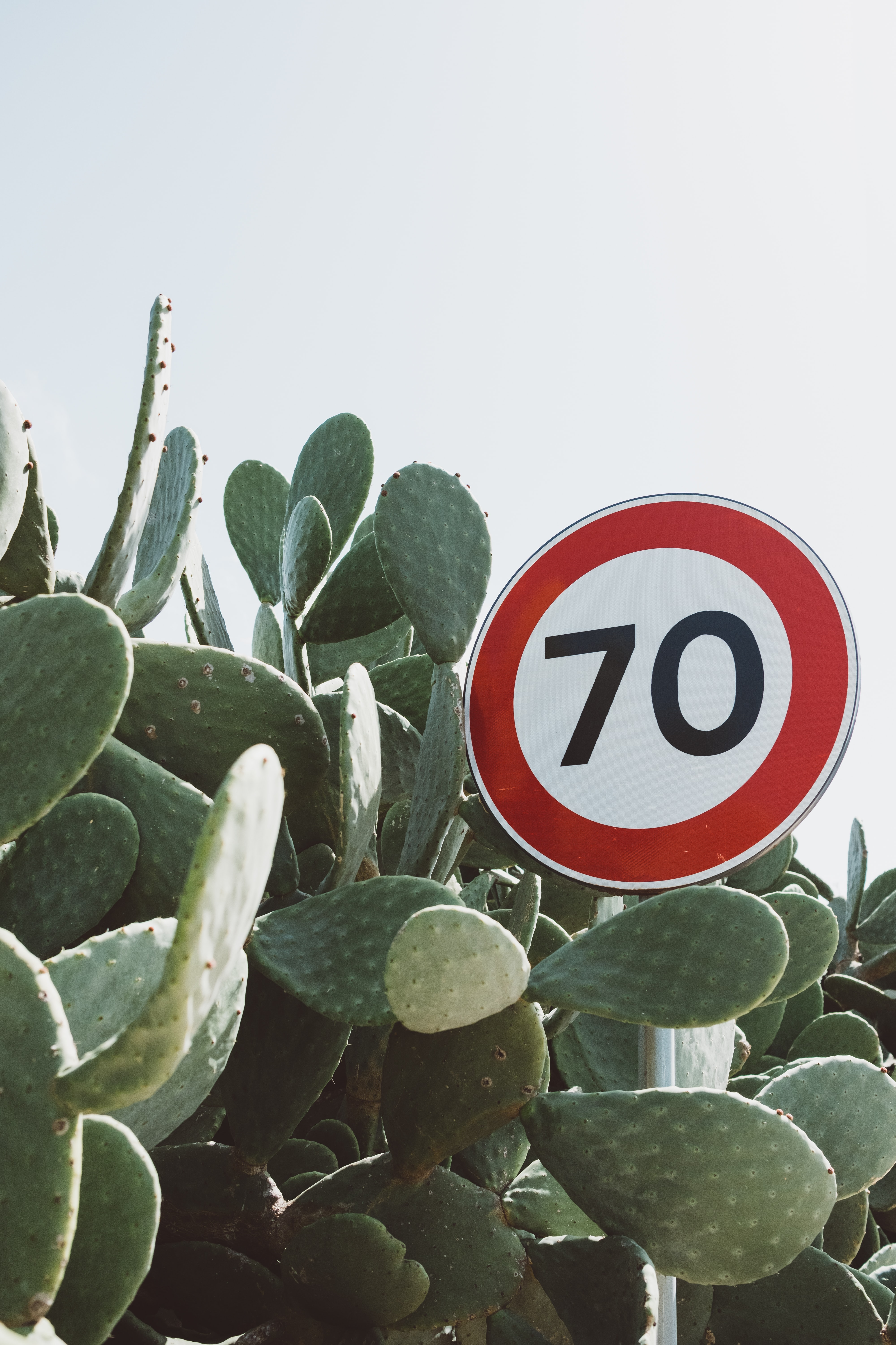 70 road sign surrounded by bunny ear cactus plant