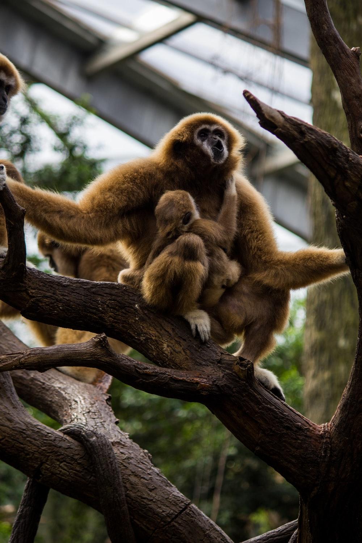 brown monkey sitting on branch during daytime
