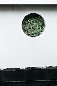 photo of white wall cutout with green leafed plant