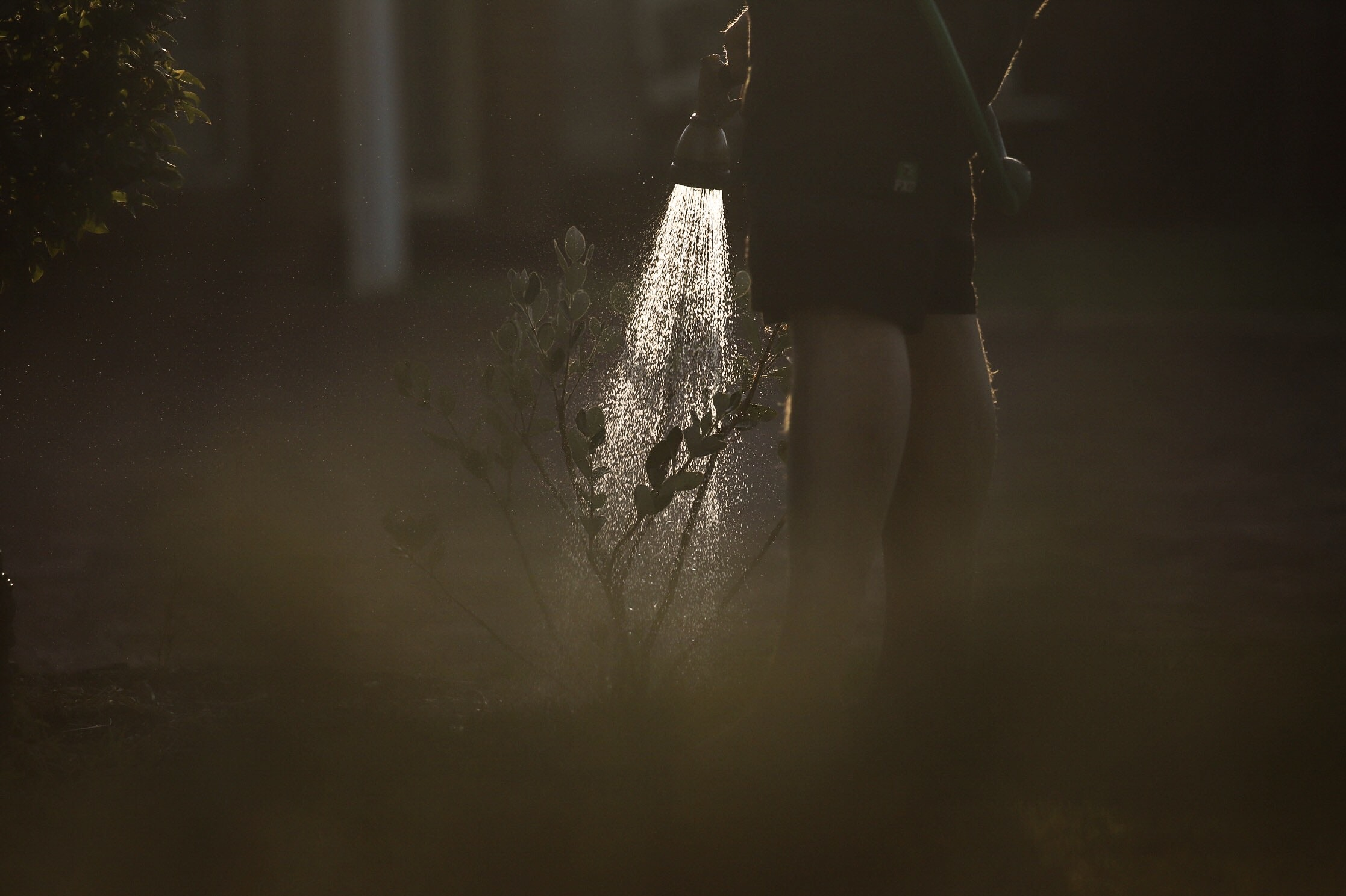 photo of person watering plant