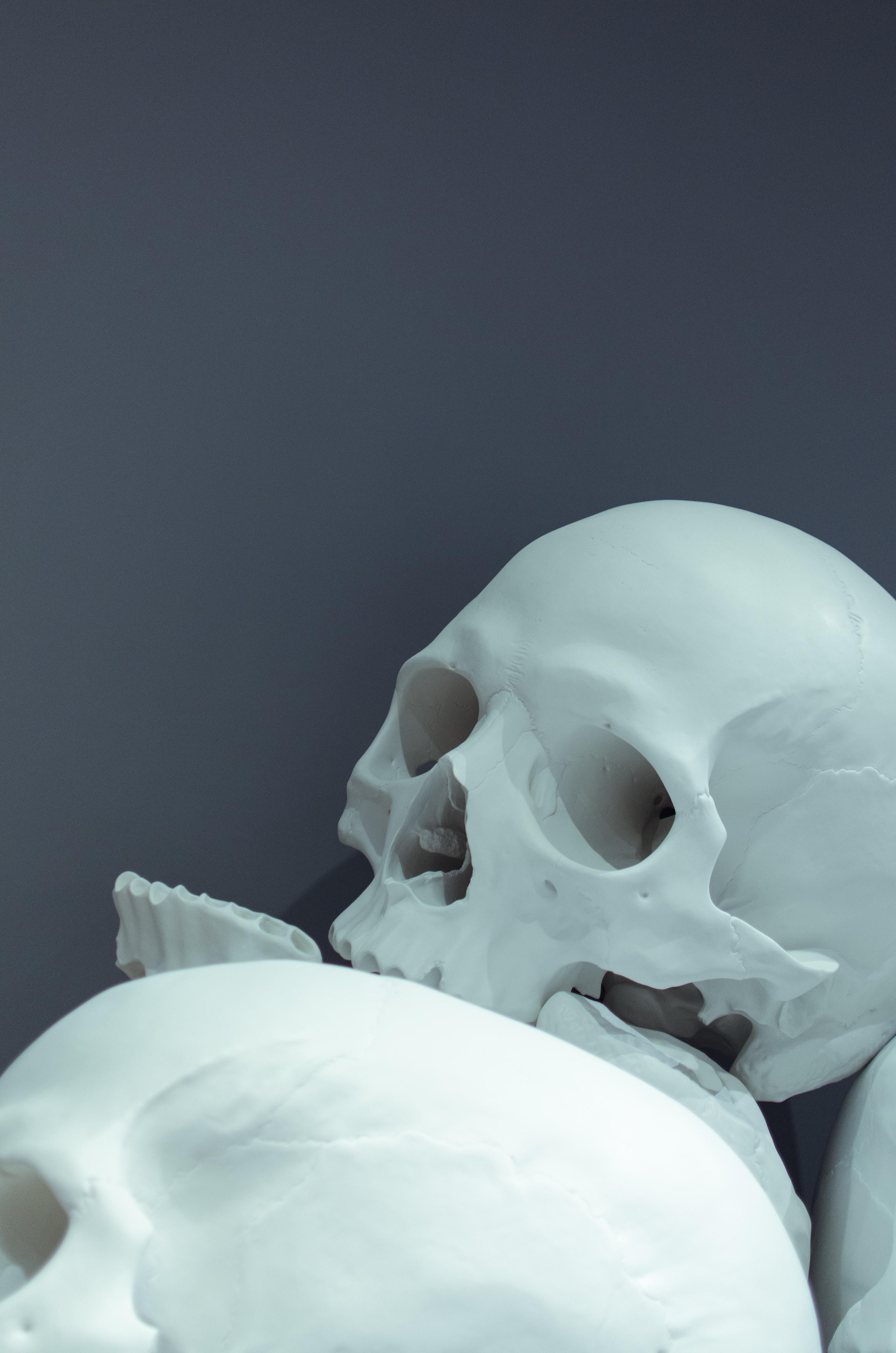 closeup photo of white skulls
