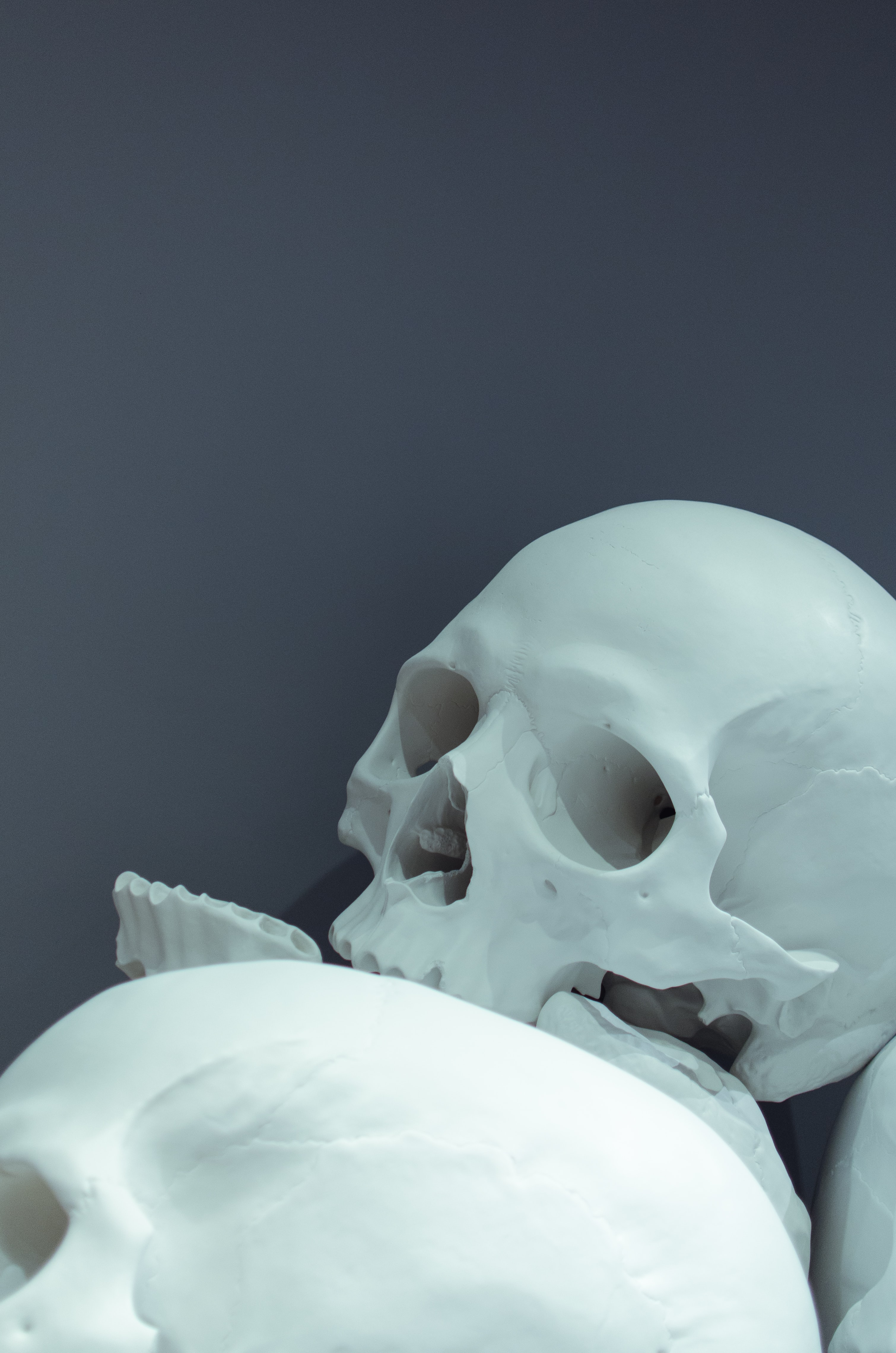 closeup photo of white skulls
