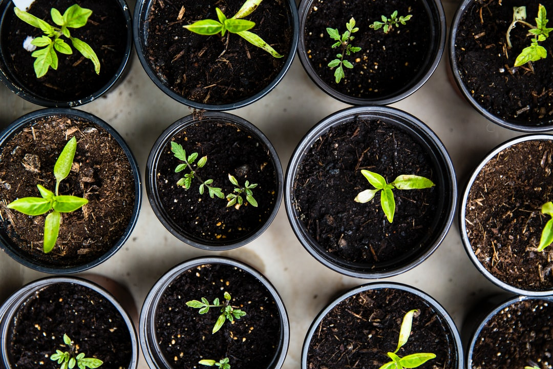Organic growth only gets you so far, here's how to grow further