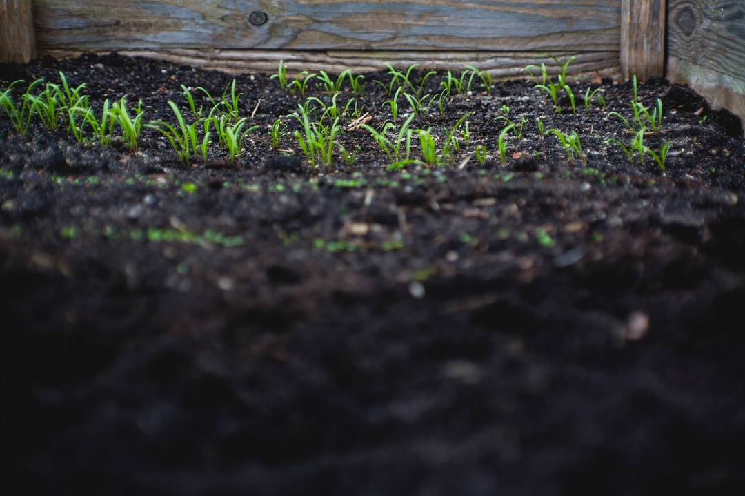 How To Prepare Garden Soil For Next Season