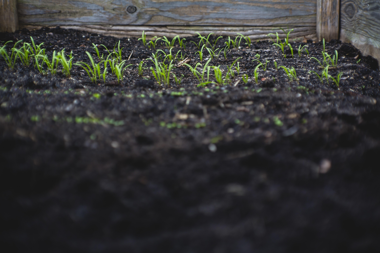 green leafed plants on black soil at daytime