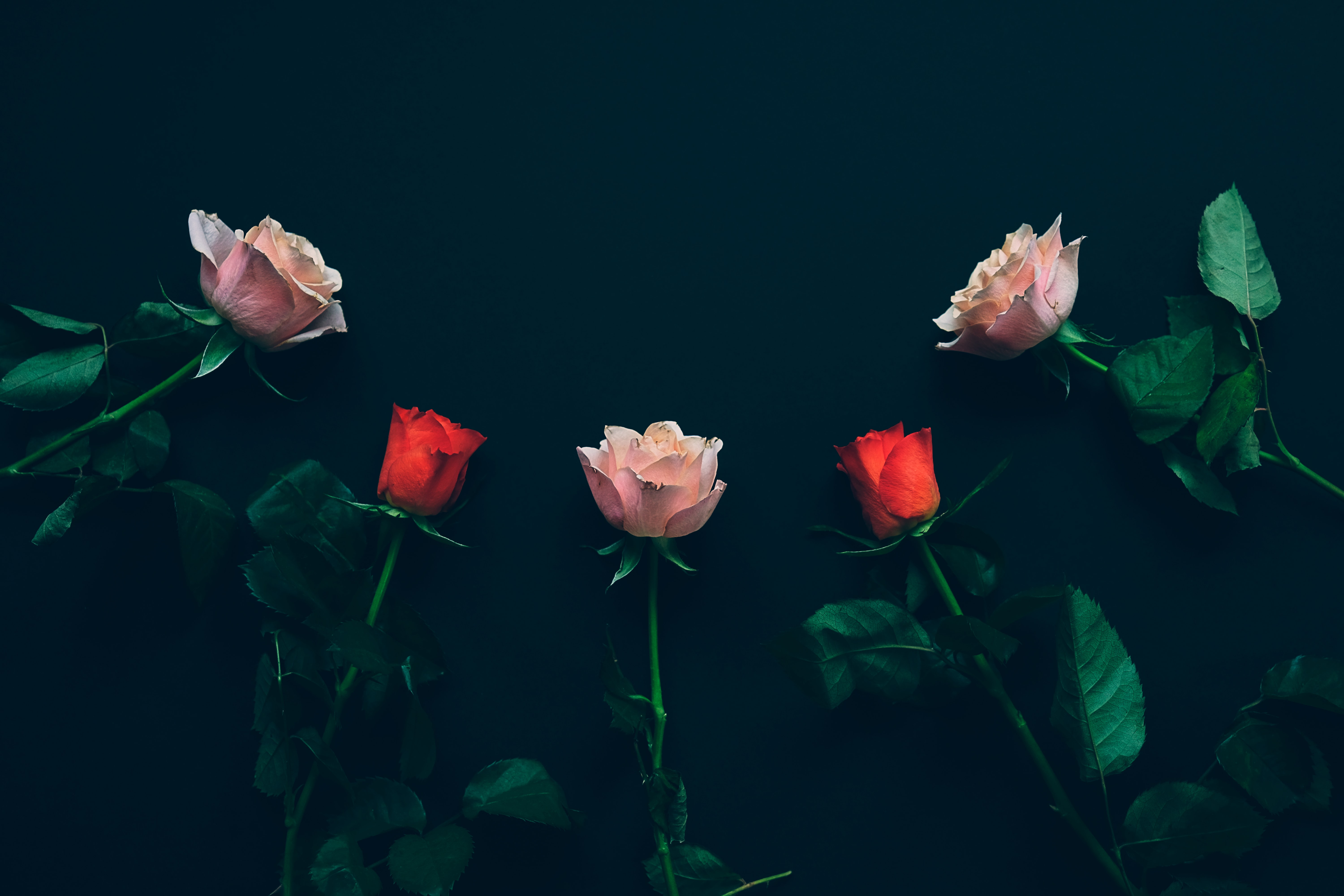top view of two red and three pink roses on black surface