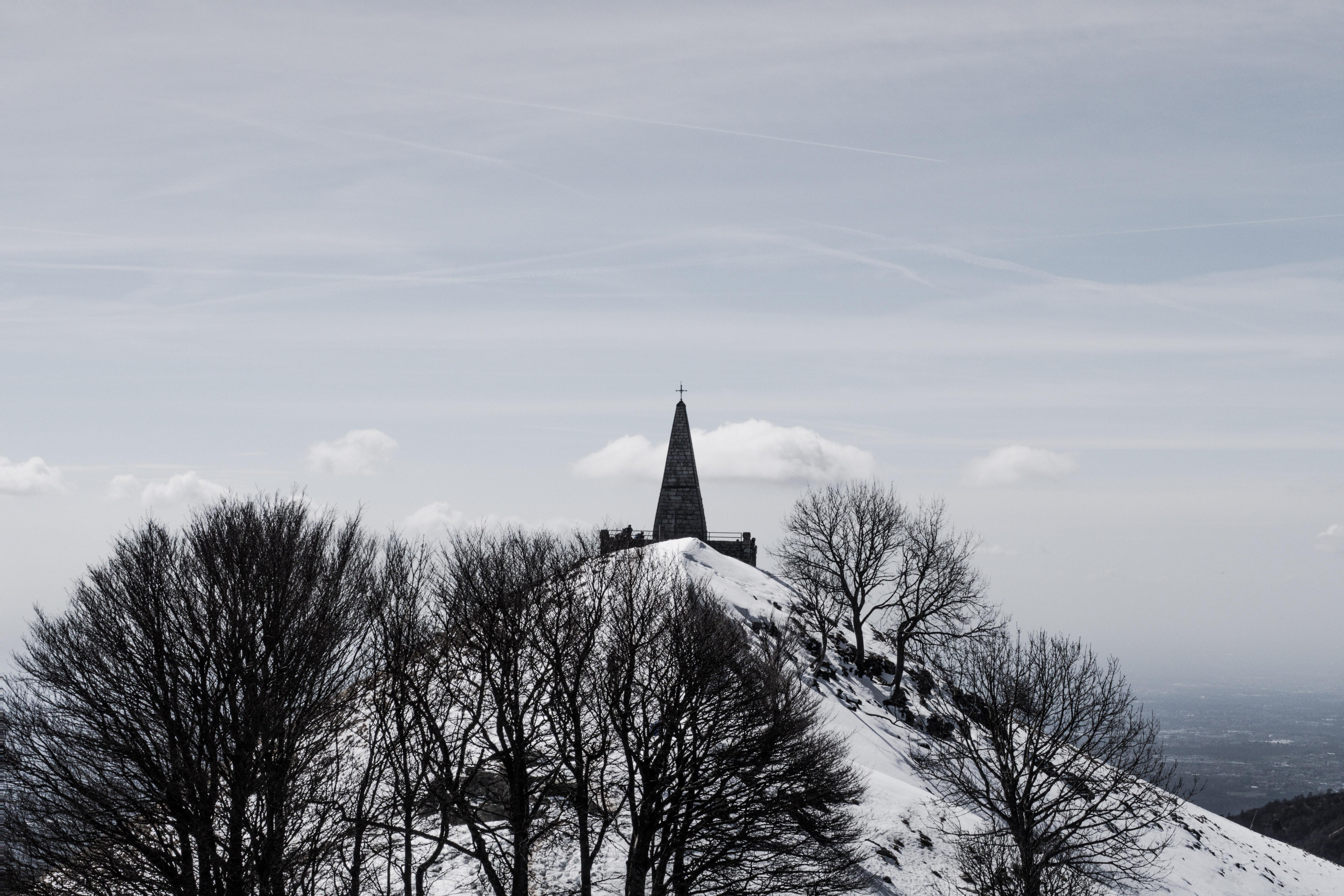 trees on snow mountain