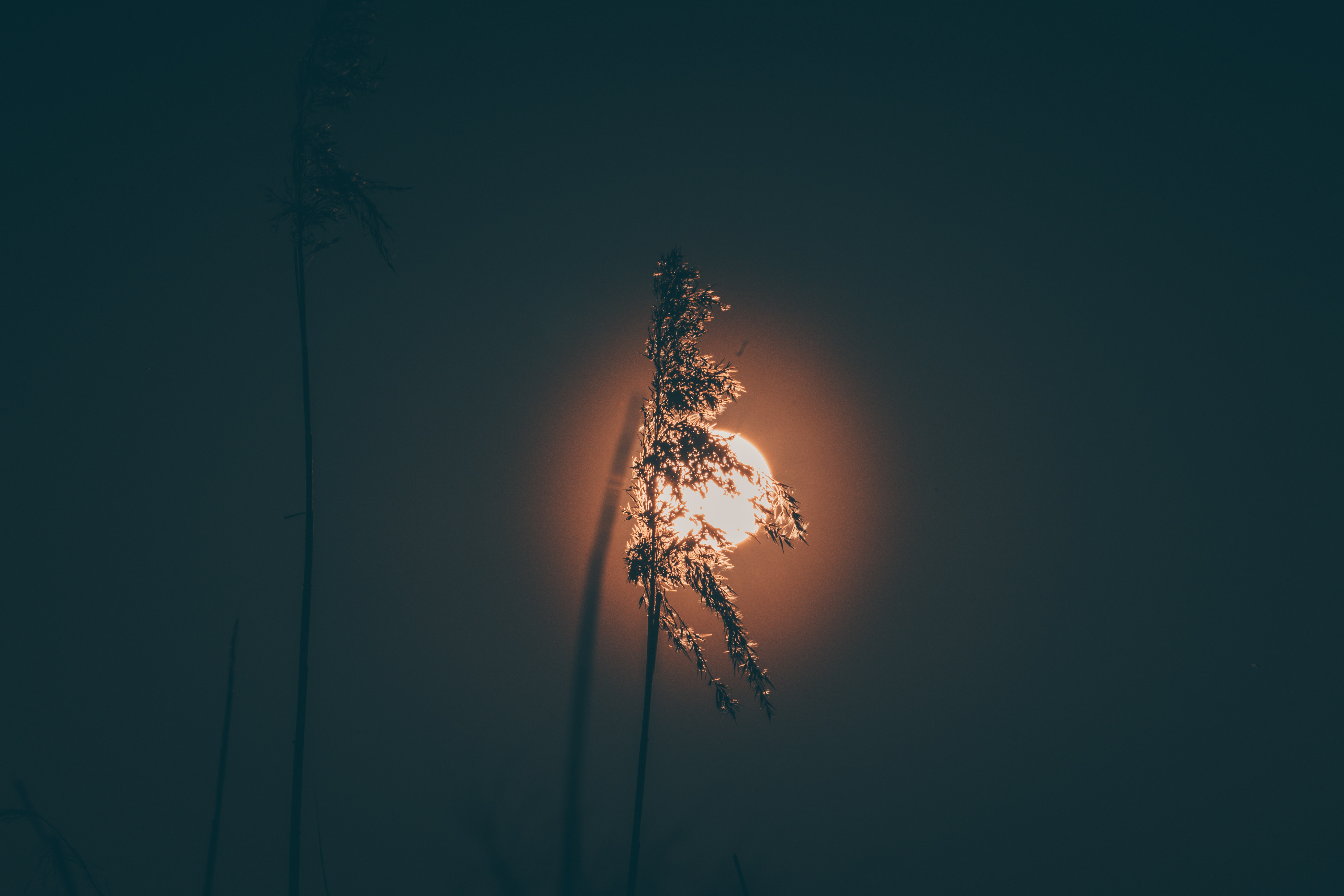 silhouette of plant during night time