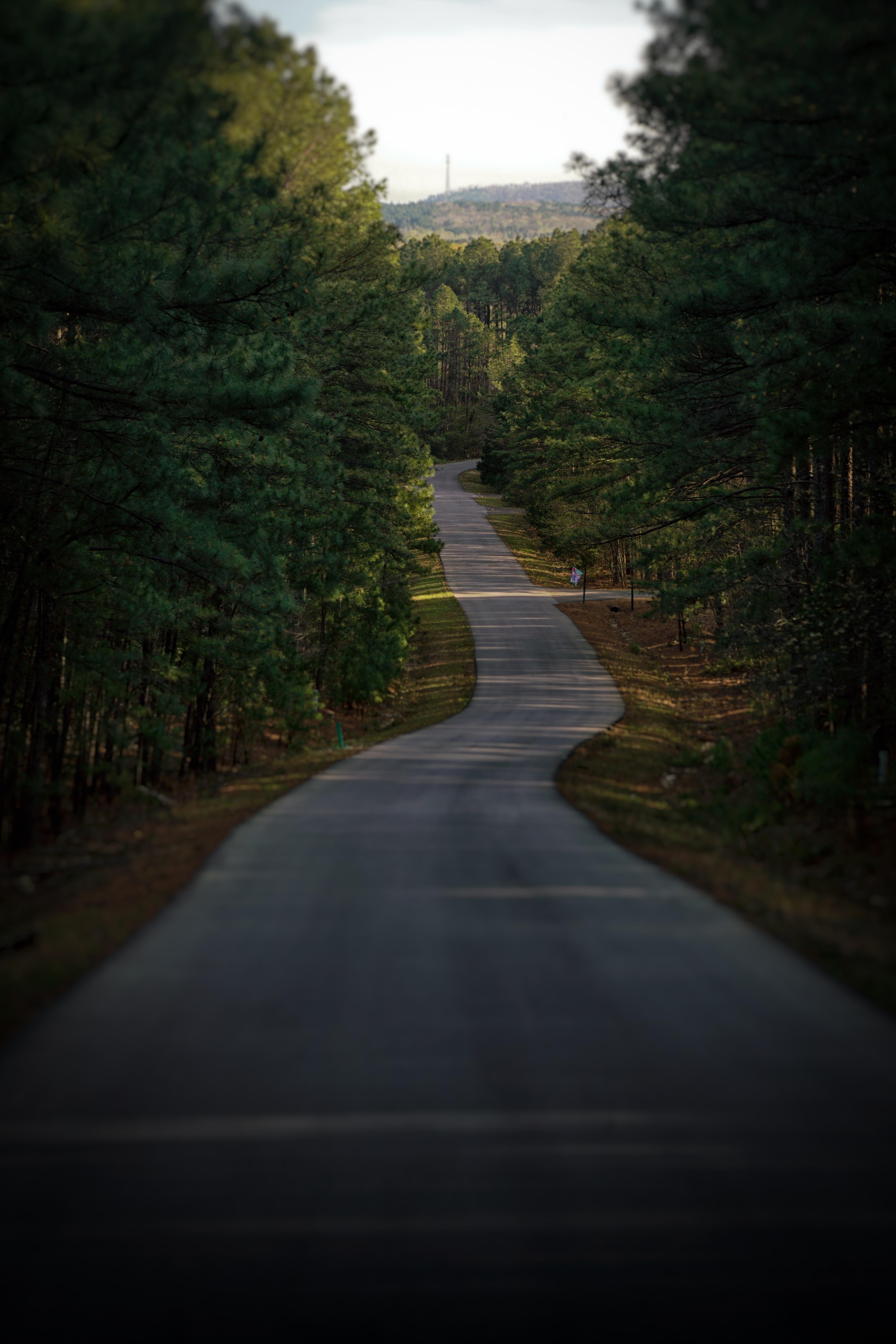 grey asphalt road between trees during daytime